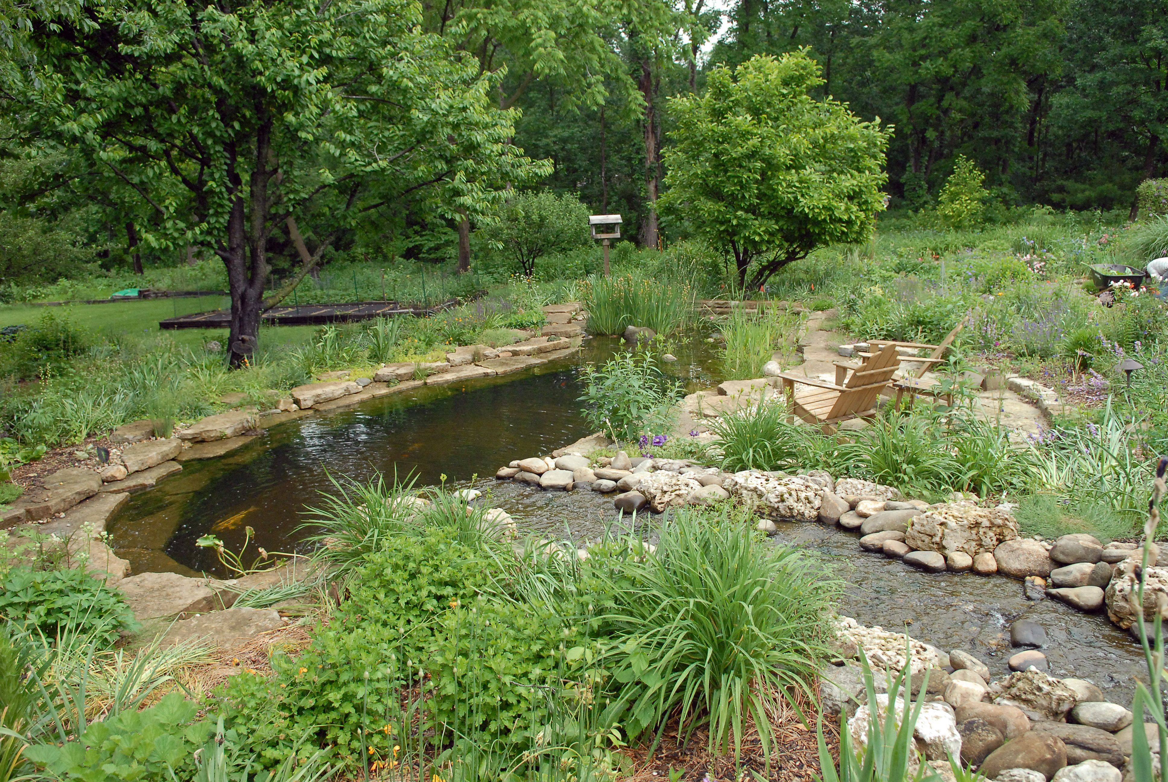 One of the ponds in Dee and Bob Raimondi's gardens is designed for swimming.