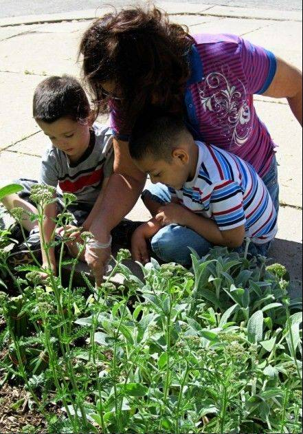 Creating a butterfly garden allowed students to put to use the knowledge and skills they acquired in May during a monthlong study of gardening.