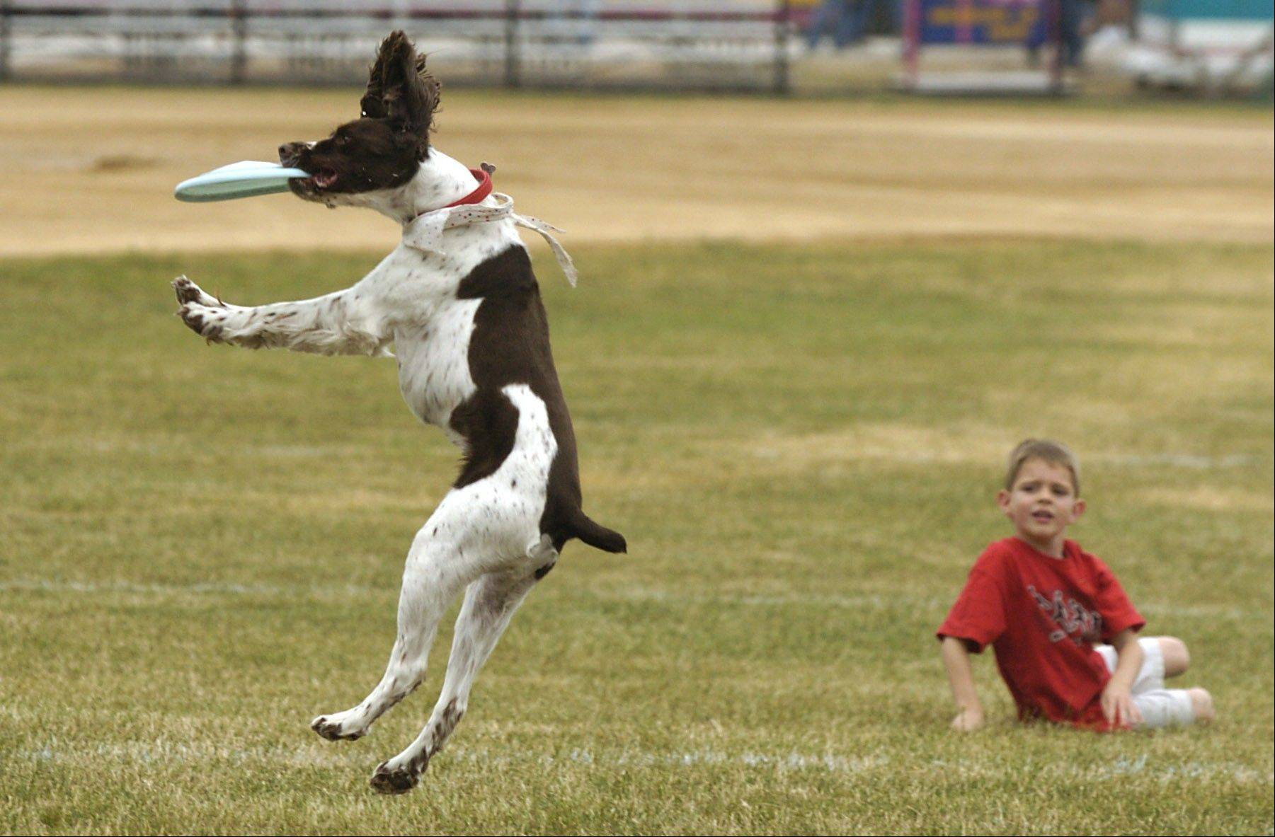 The dog Frisbee-catching contest is a highlight of the festival every year.