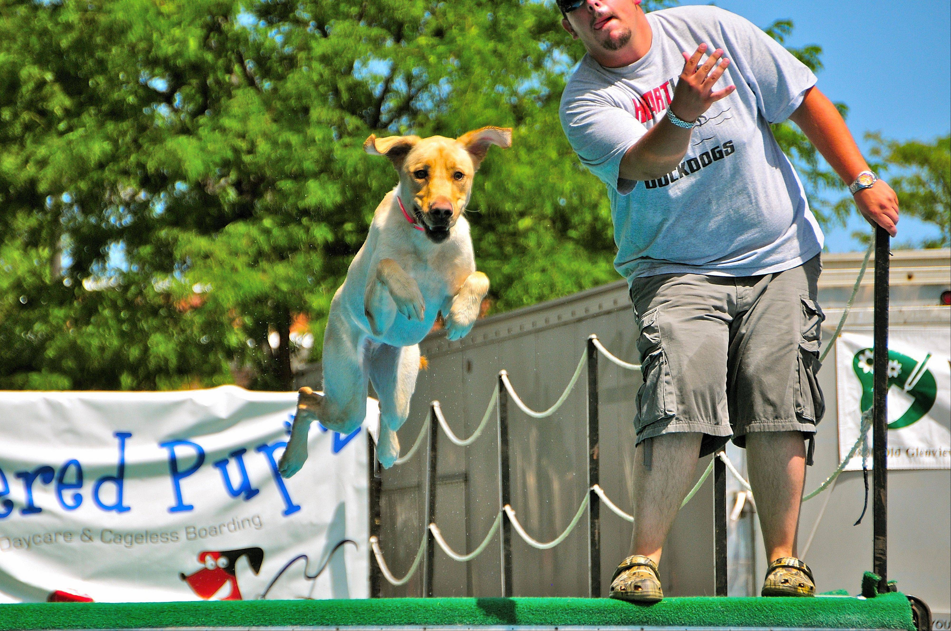 The Dog Days of Summer in downtown Libertyville July 7-10 will feature more than 100 nationally ranked top jumping dogs competing for prizes and rankings, as well as a variety of canine-focused competitions, promotions and activities.
