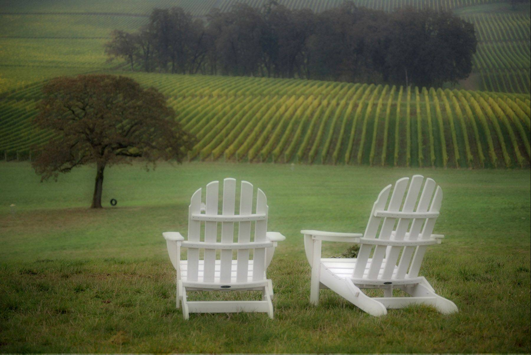 A foggy morning at a vineyard in Oregon.