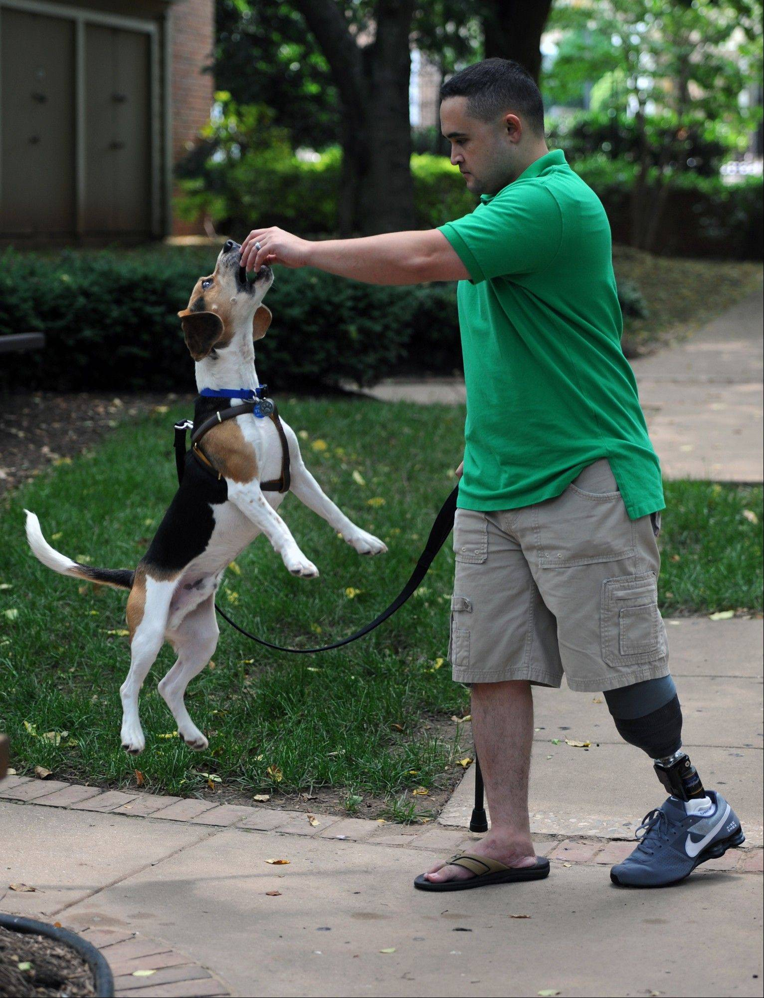 "War amputee Jimmy Childers and Tidus, the beagle he rescued through Pets to Vets, in Gaithersburg, Md. Tidus is not a trained service animal. ""He�s here to bring joy into my life, and he does that every day,"" Childers says."