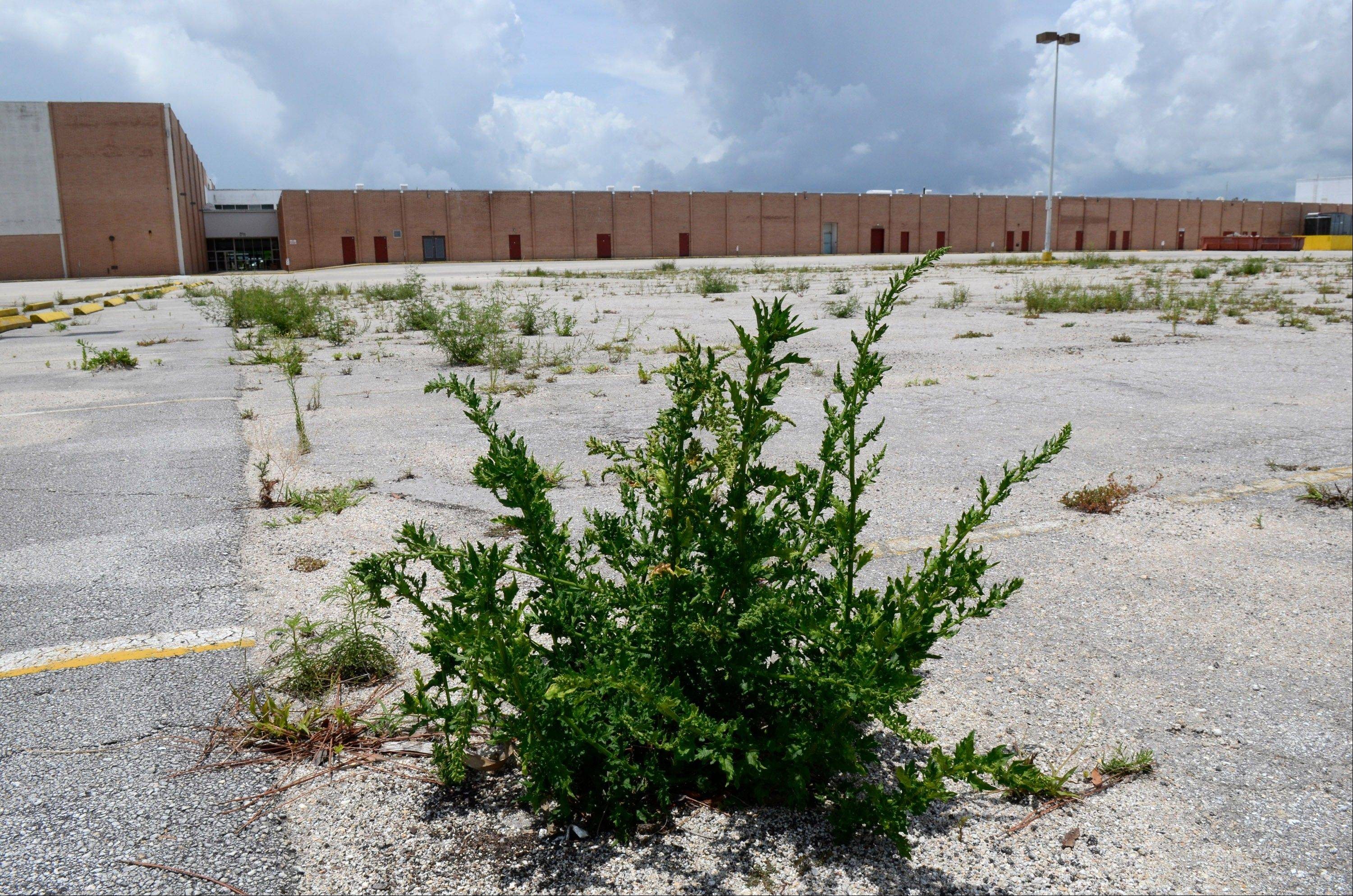"Weeds rise up through the asphalt in a parking lot outside the Miracle City Mall in Rockledge, Fla. An uncertain future faces cities in Florida's ""Space Coast"" as the space shuttle program comes to an end."