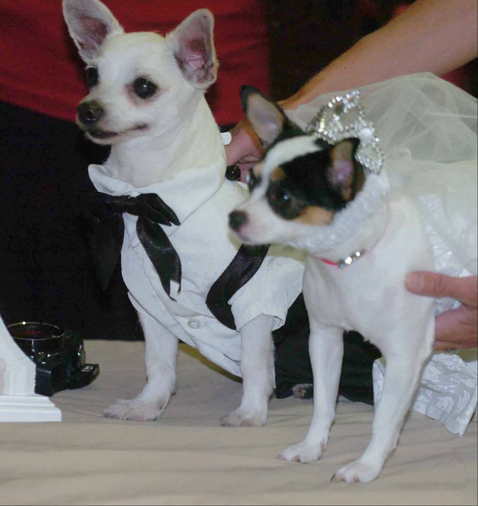 Sparky Perez, left, and Peanut Bobik, right, celebrated their summer nuptials Thursday, June 30, at the DuPage Convalescent Center's 3 North unit. The wedding was organized as a fun activity for residents by nurse's aid Cheryl Bobik.