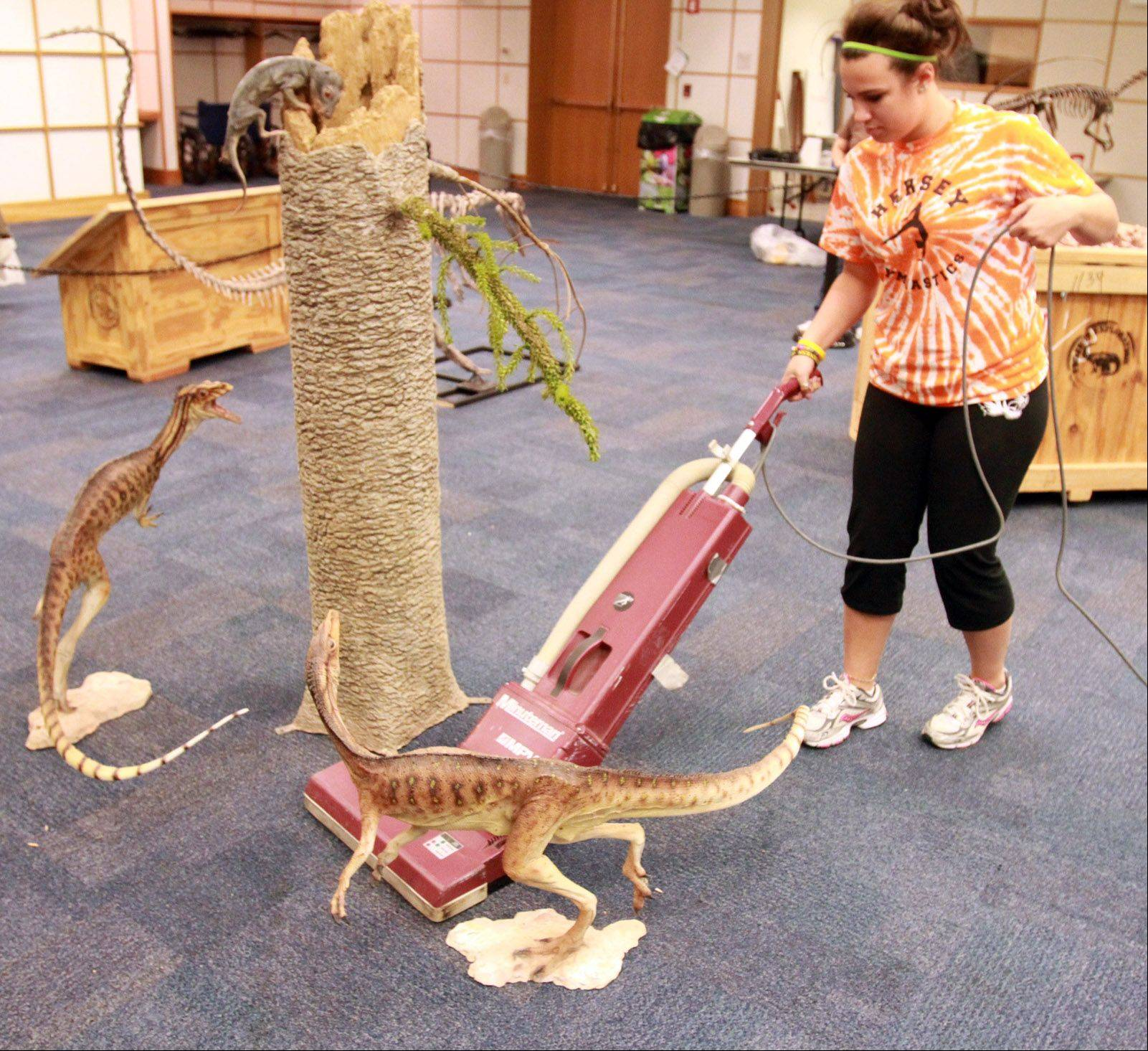 Volunteer Elizabeth Curley, 16, of Arlington Heights, vacuums around two flesh replica Eorapotors.
