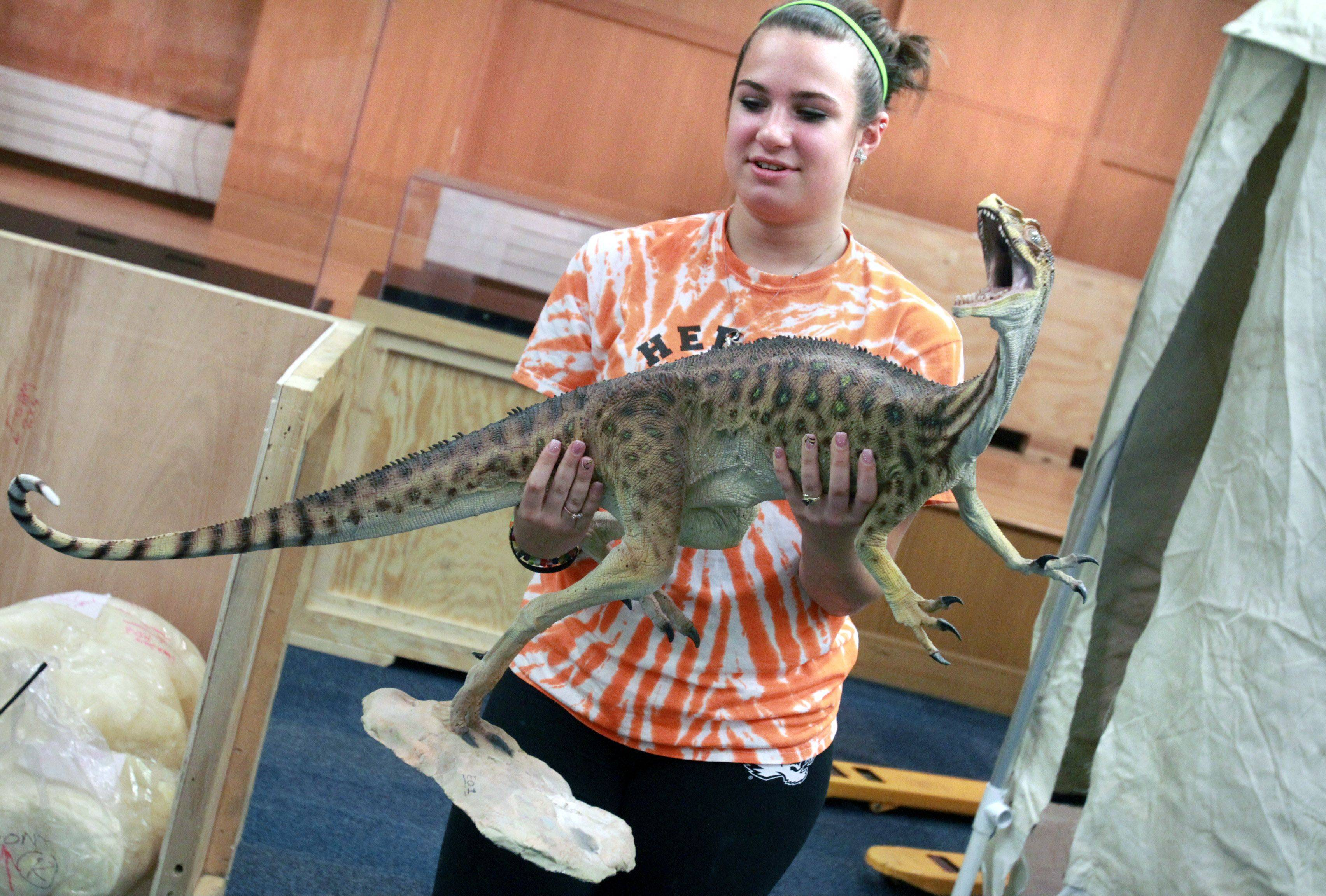 Volunteer Elizabeth Curley, 16, of Arlington Heights, carries a flesh replica of an Eorapotor.