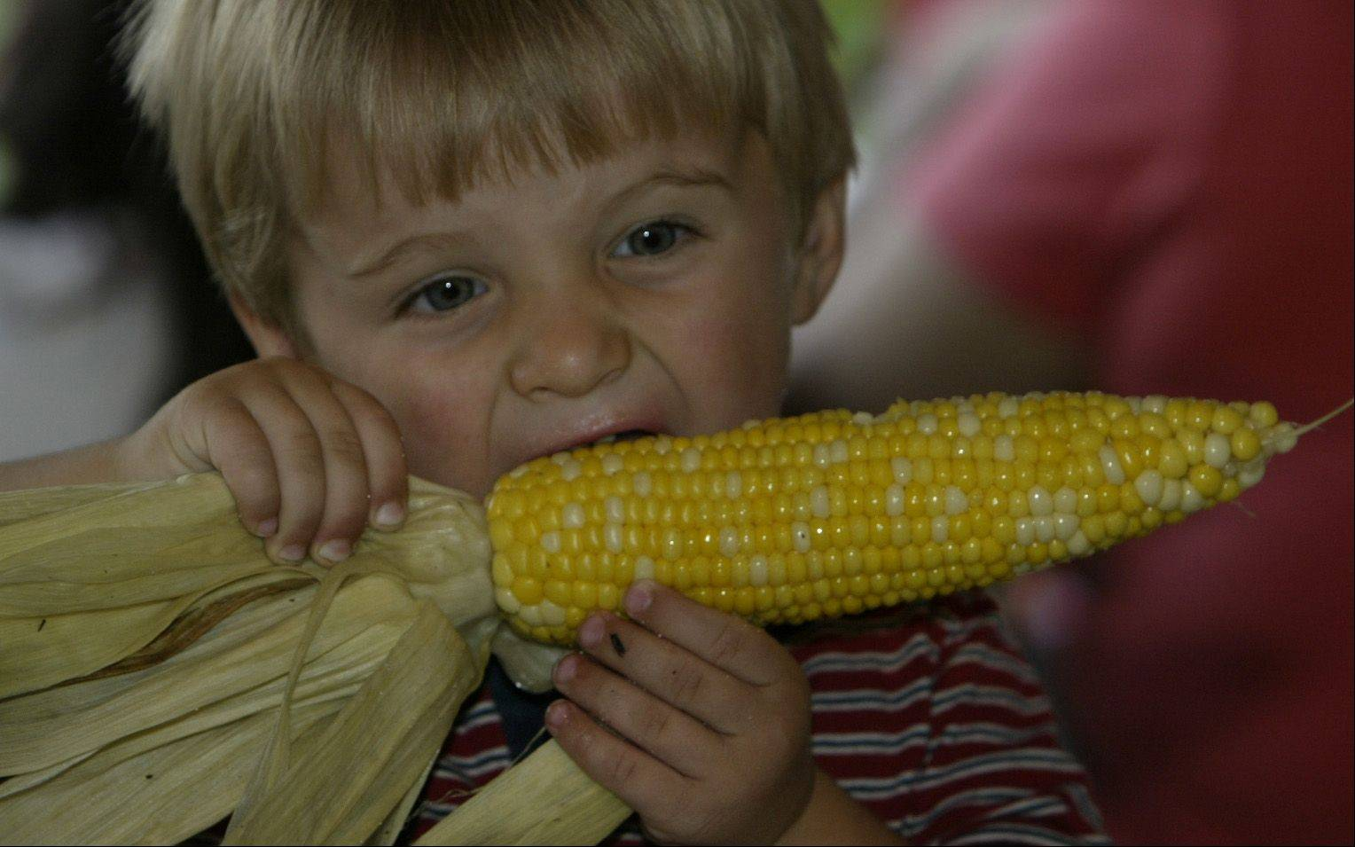 Cody Messick, 2, of Harvard enjoys grilled corn on cob at a previous Greek festival held at St. Sophia's Church in Elgin.