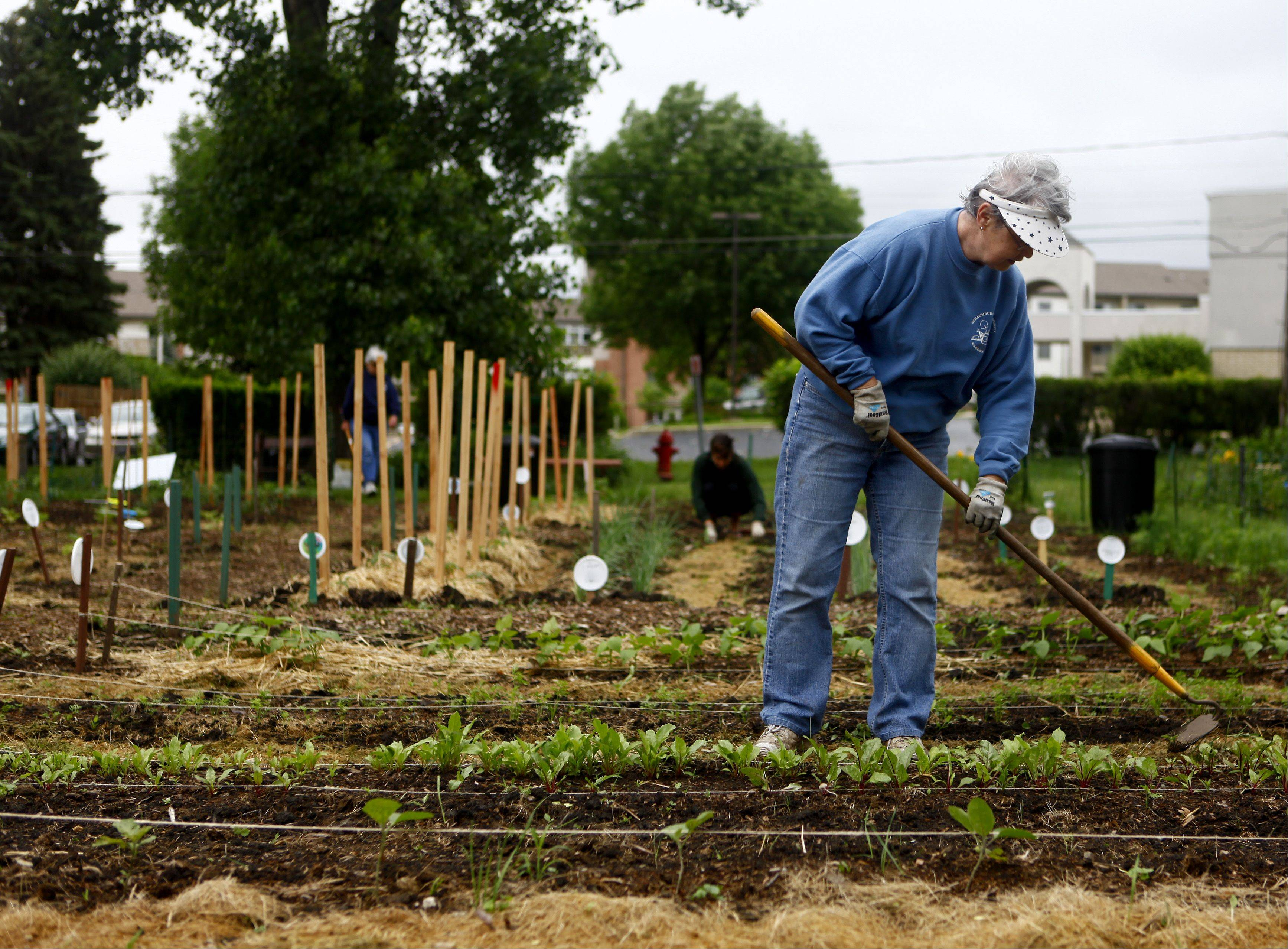 Community gardeners grow fresh produce for local food pantry