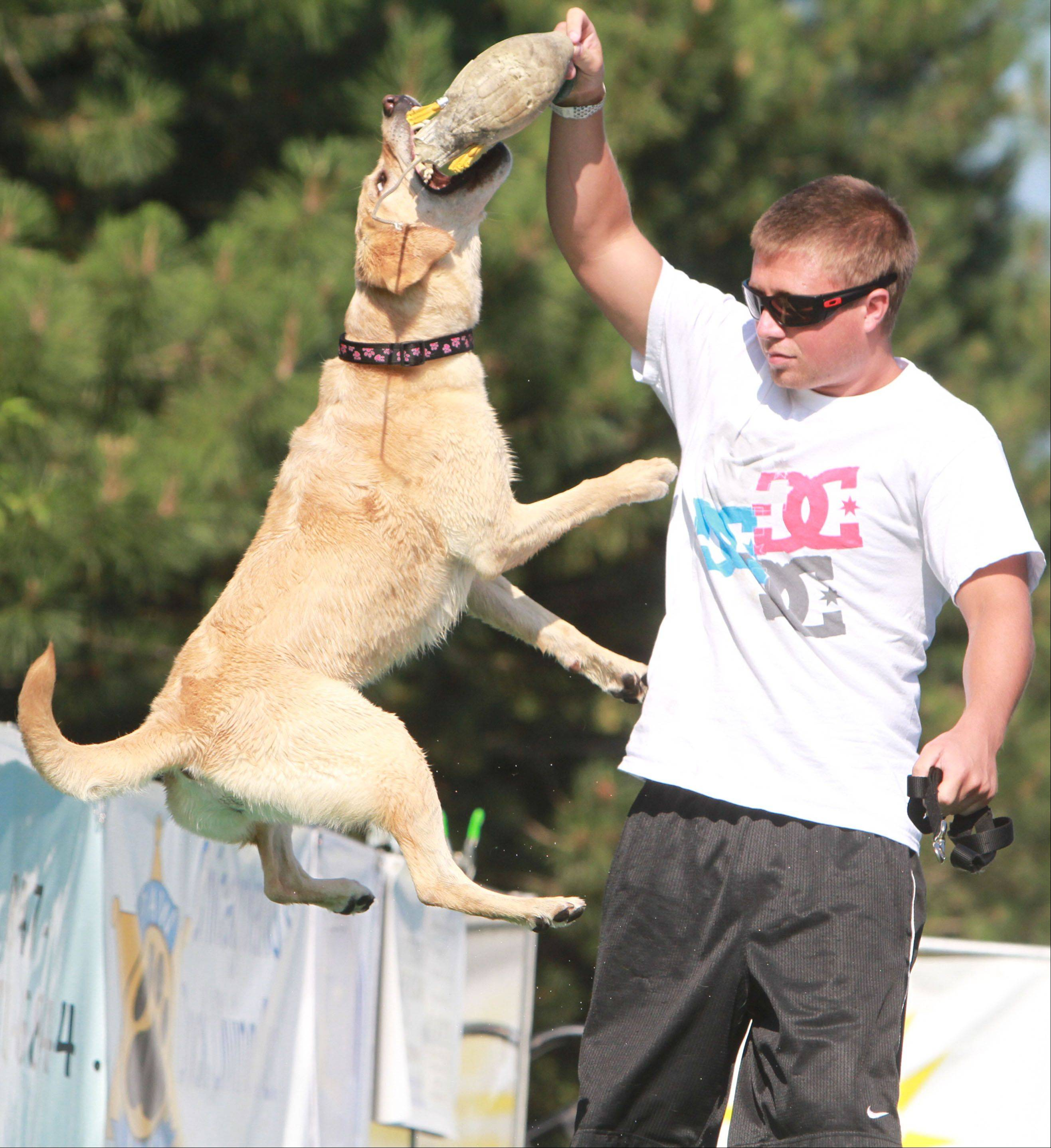 Robert Burns of Mundelein gets his golden labrador retriever, Sedona, excited before competing in the DockDogs-Big Air Jumping competition.