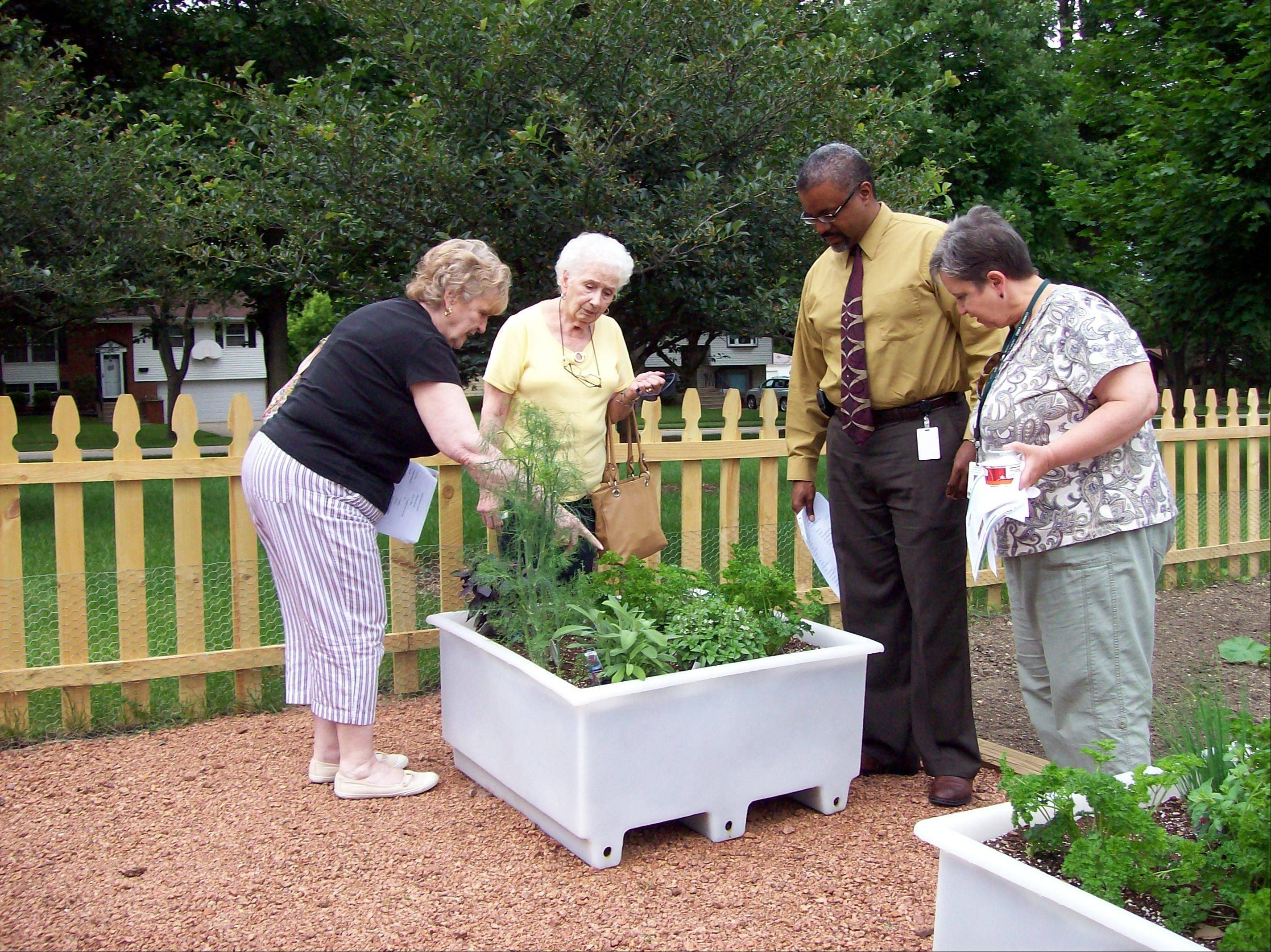 Raised beds and walkways make the garden easy for all age groups to participate in its maintenance and care.