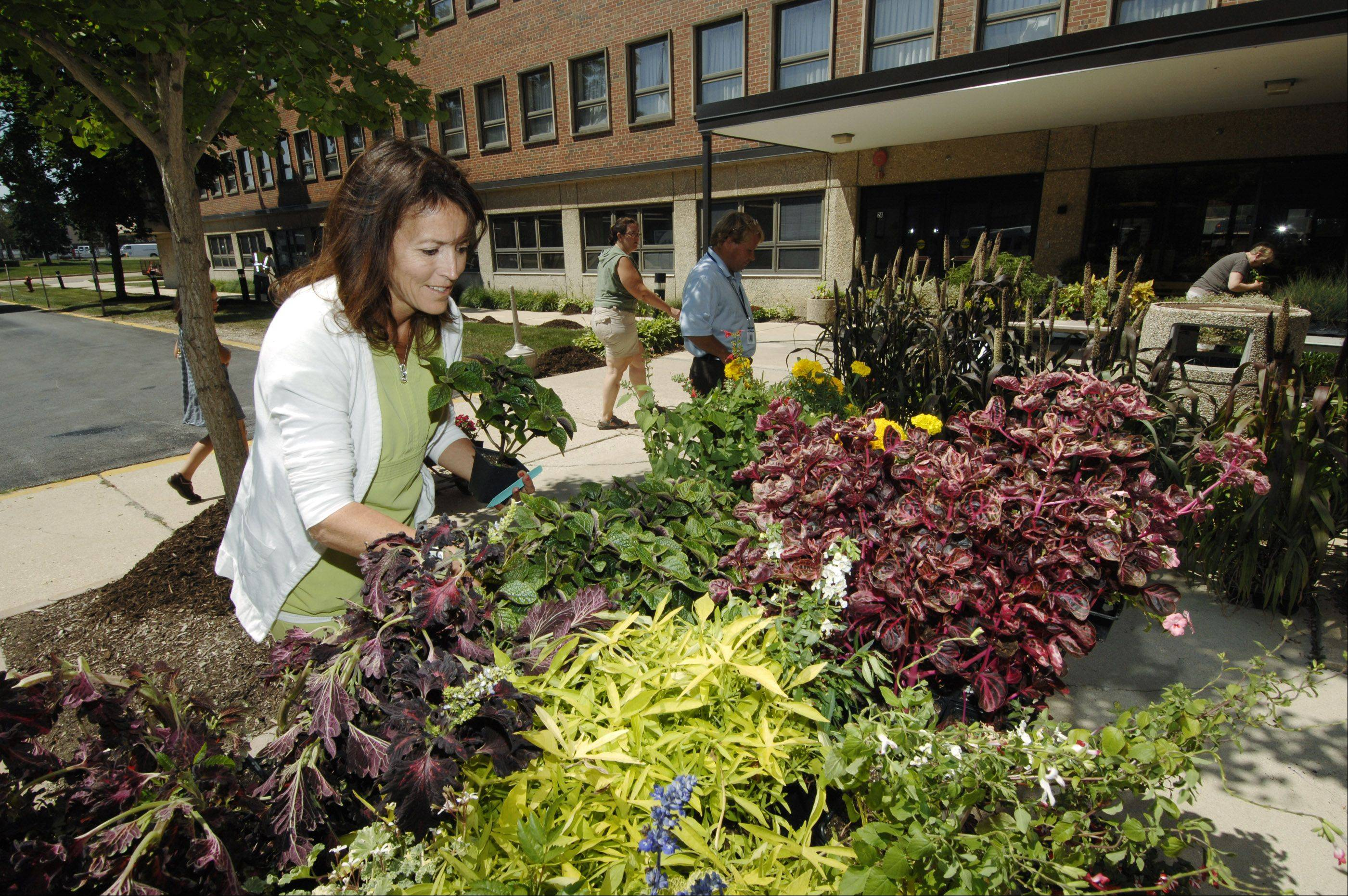 Lenora Trent, one of the nurses at the DuPage Convalescent Center in Wheaton, beats the rush to find flowers at the center's annual plant sale Friday. The plants were on sale for $5 per flat and were donated by Cantigny.