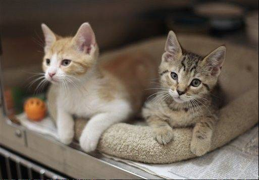 Rhode Island requires most cats to be sterilized, and Los Angeles requires most dogs and cats to be spayed or neutered by the time they are 4 months old.