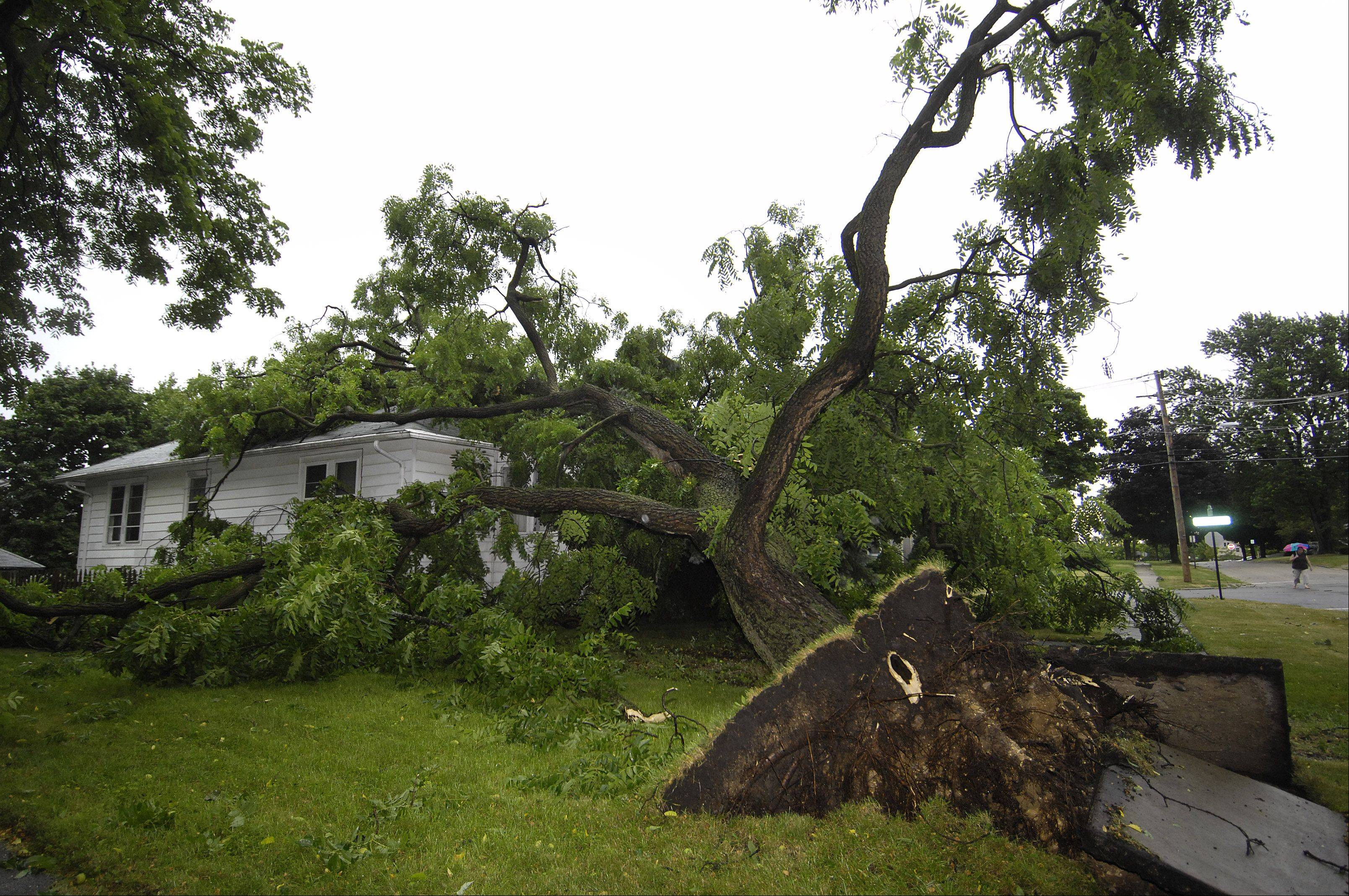 A large tree destroyed the bedroom of a home on Ellsworth Street in Crystal Lake early Monday. The homeowner had just left the house.