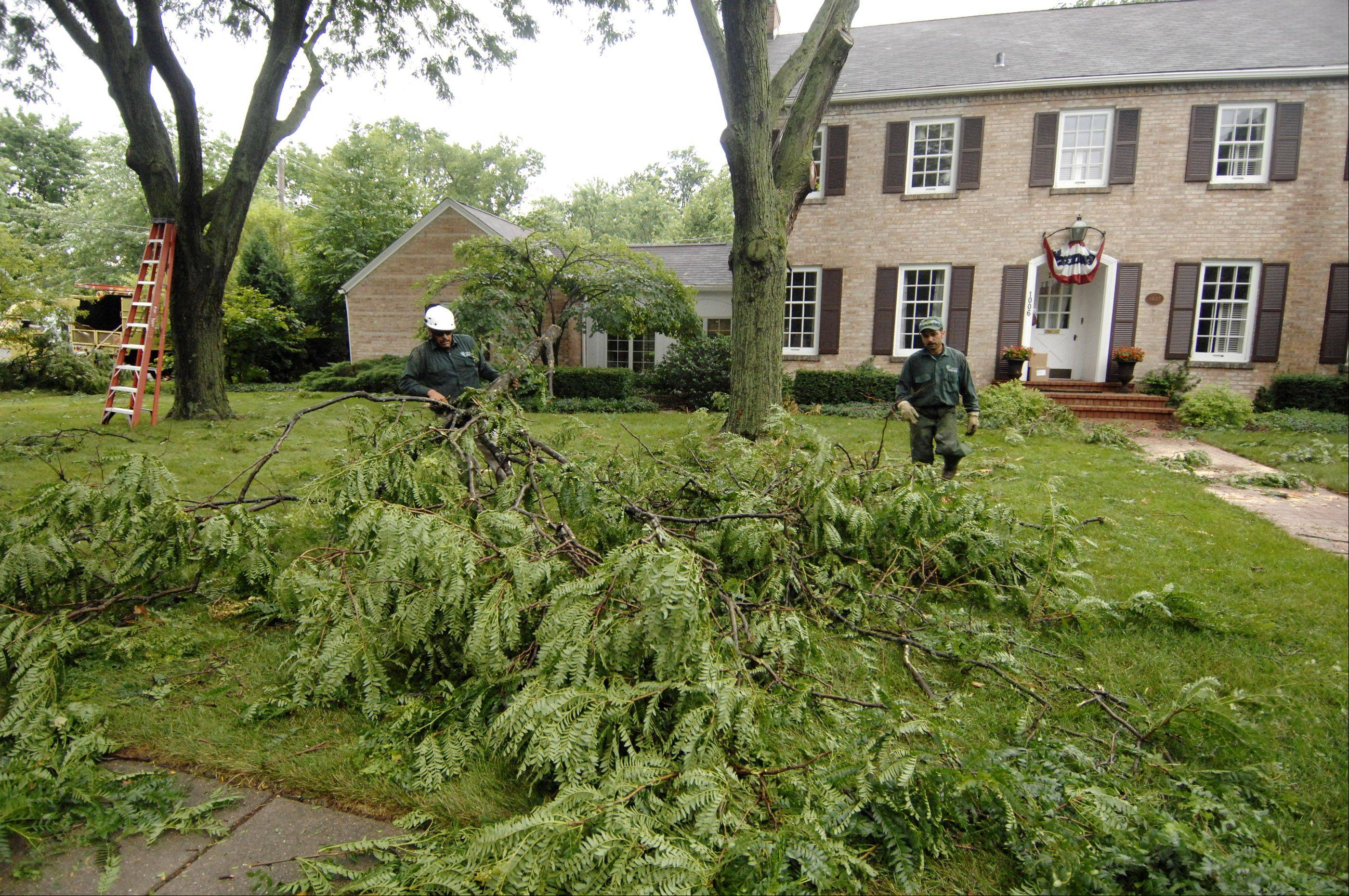 Many trees were damaged Monday morning during a fast-moving storm that raced through the region, including these in a yard on North Main Street in Wheaton.
