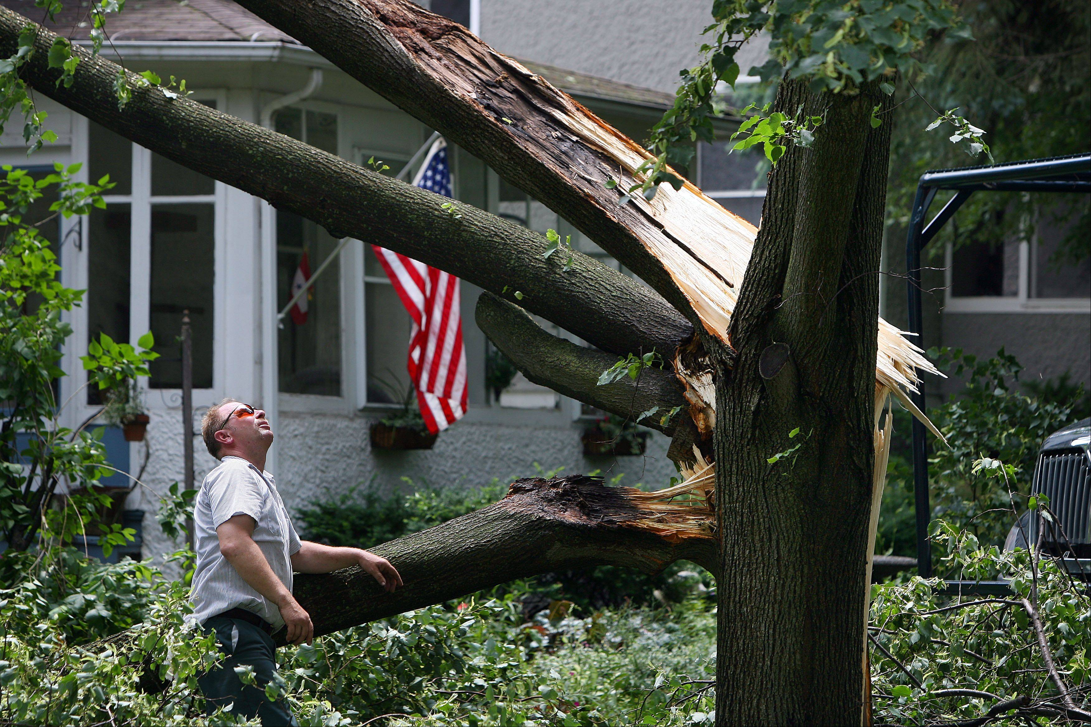 Dennis Matusek with Libertyville Public Works examines this tree that fell into a house on the 200 block of Second Street in Libertyville Monday morning after an intense storm blew through the area.