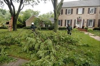 Many trees were damaged Monday morning during a fast-moving storm, including trees in a yard on North Main Street in Wheaton.