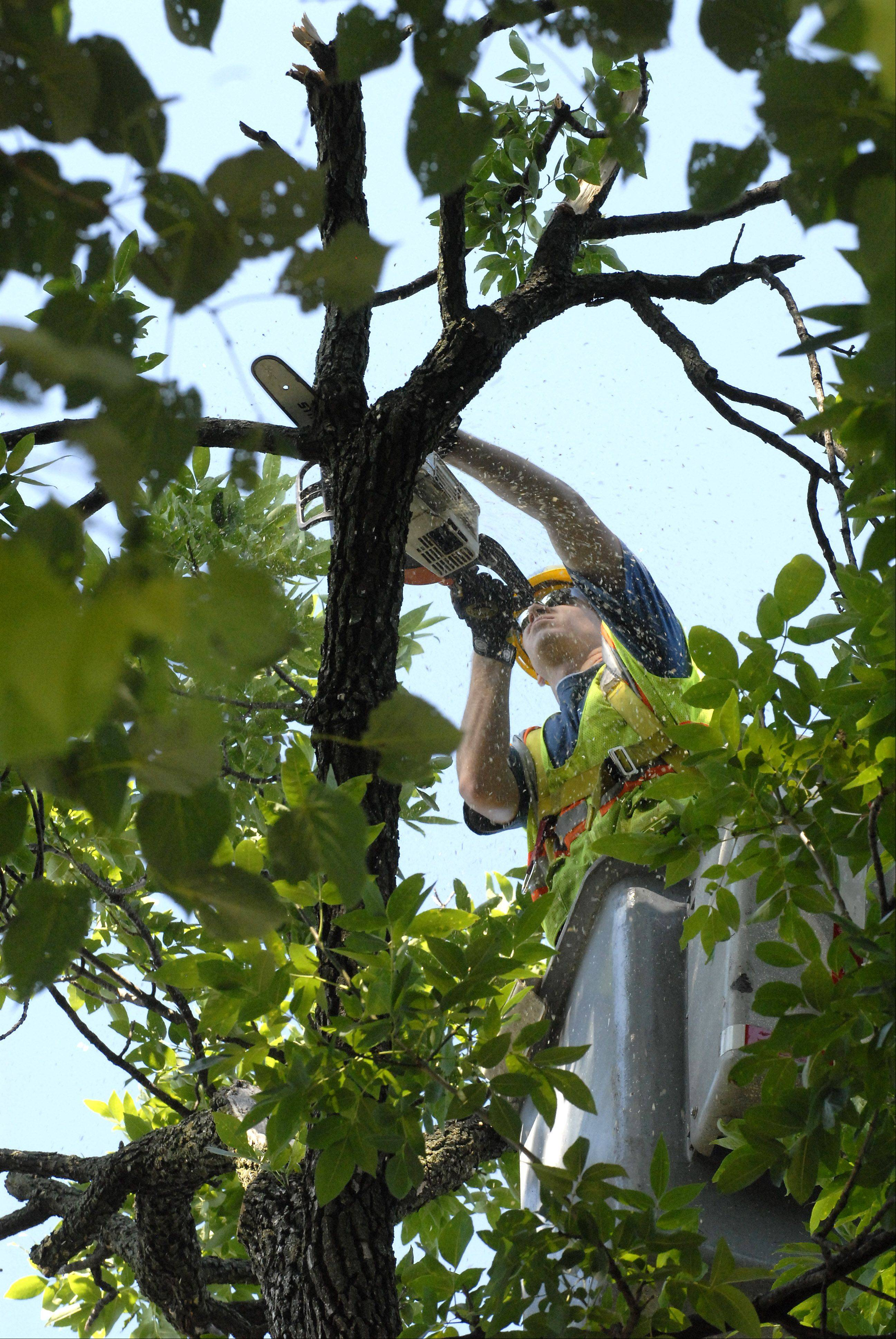 Forestry crew member Seth Westberg saws off a broken limb Tuesday morning on Busse Avenue just east of Maple Street in Mount Prospect. Though Monday's storm downed trees and limbs, damage was minimal compared to what was left after a tornado hit town last month.