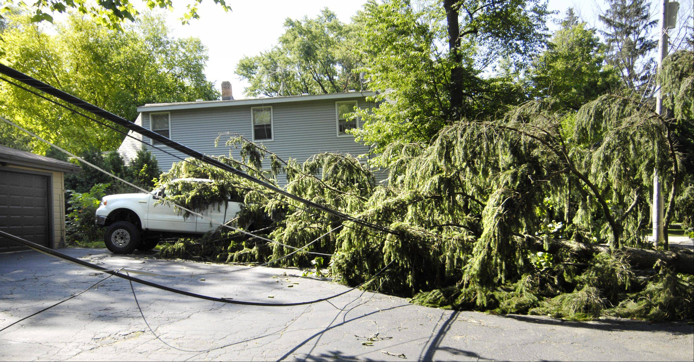 A large pine tree lays on downed power lines and a pickup truck on Oceola Drive in Algonquin Tuesday morning.
