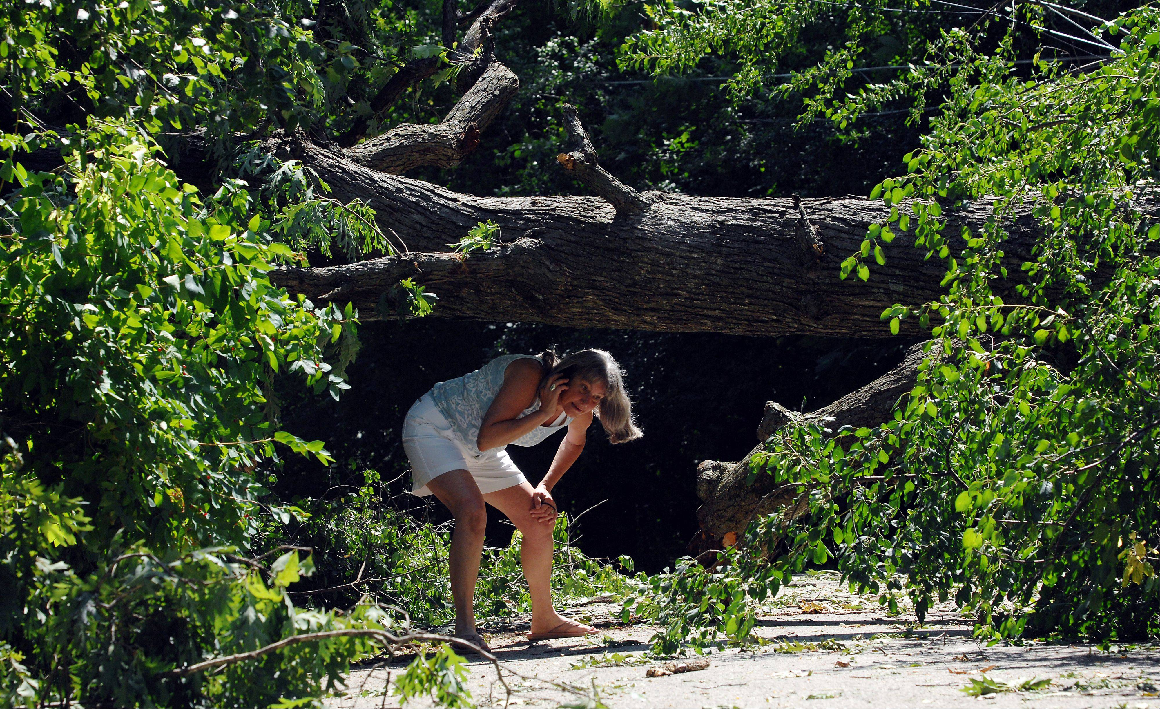 Wendy Schultz of Wisconsin who was helping out her Barrington parents Richard and Rosemary Libby who were hit hard by the storm ducks under a huge Oak tree which fell near their driveway taking out a transformer and leaving them without power for almost two days.