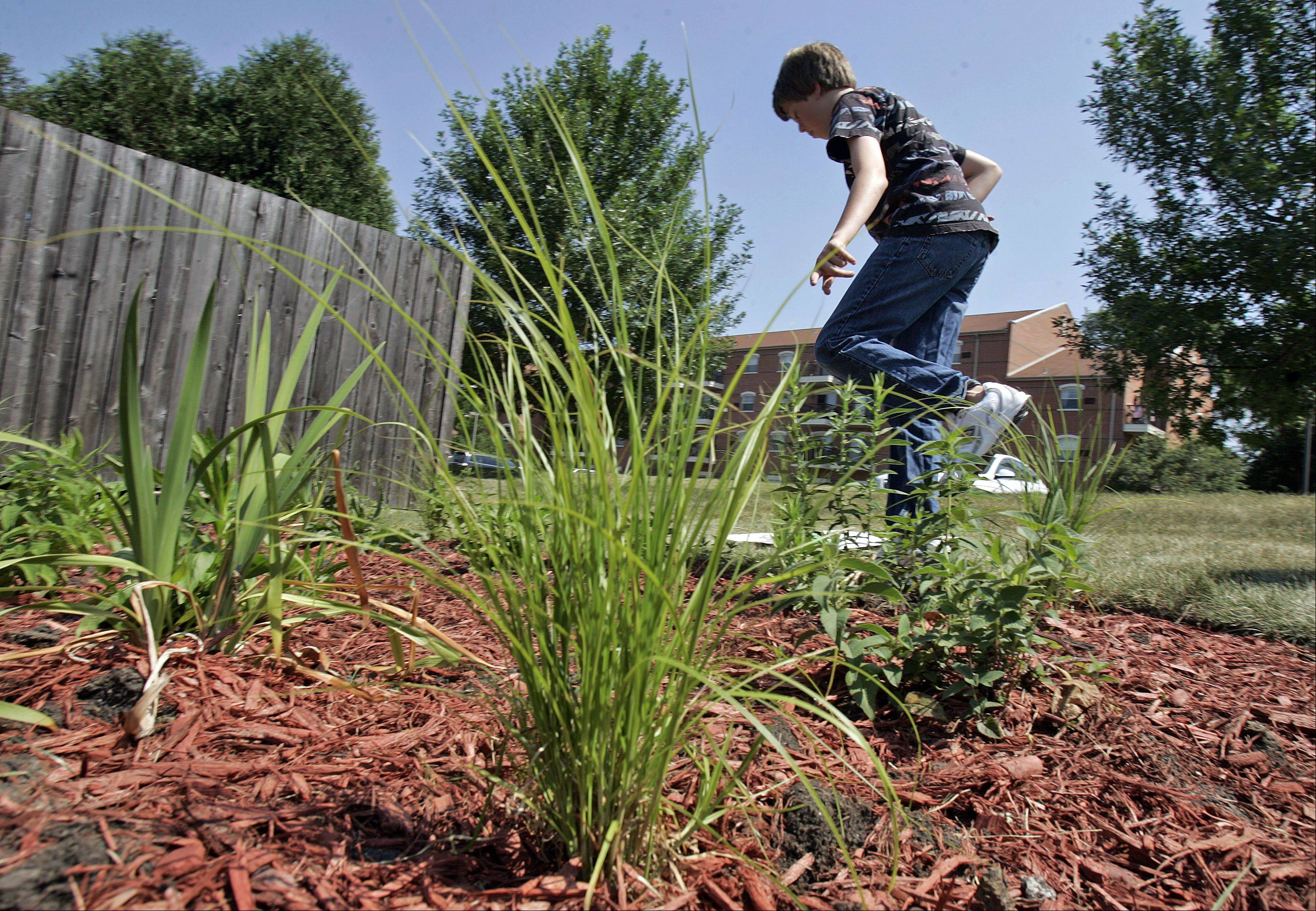 Brian Mace, 13, of Grayslake tends to his rain garden planted outside the Grayslake Public Library during its official opening recently. Mace completed the project as part of his seventh-grade service learning project at Prairie Crossing Charter School. The garden features six varieties of plants that benefit from rain water runoff.