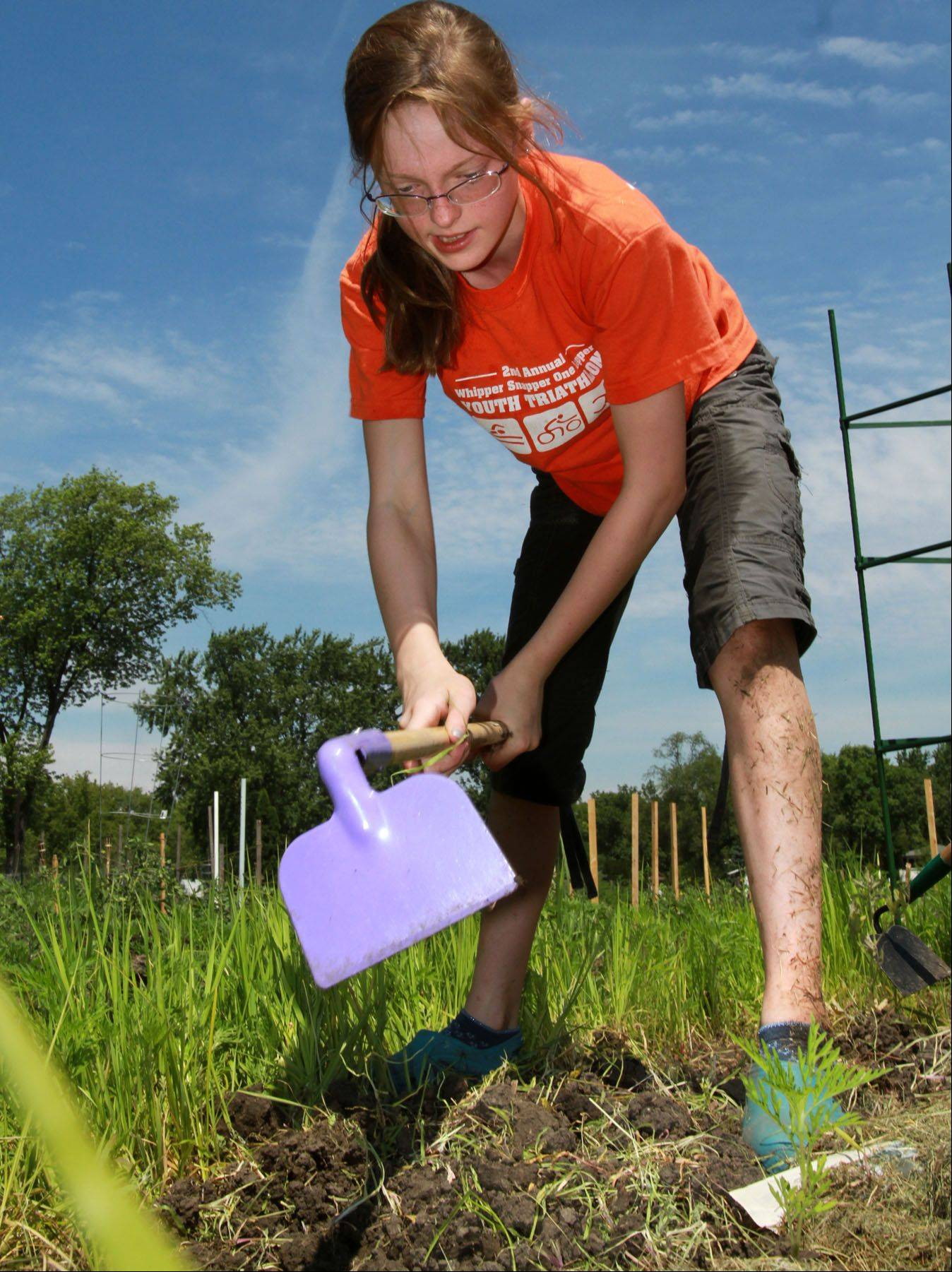 George LeClaire/gleclaire@dailyherald.comVolunteer Mili Meredith, 11, of Arlington Heights cultivates the soil at the new produce garden plot created by the Arlington Heights Neighborhood Association, in Frontier Park in Arlington Heights. The produce is donated to the Wheeling Township Food Pantry.