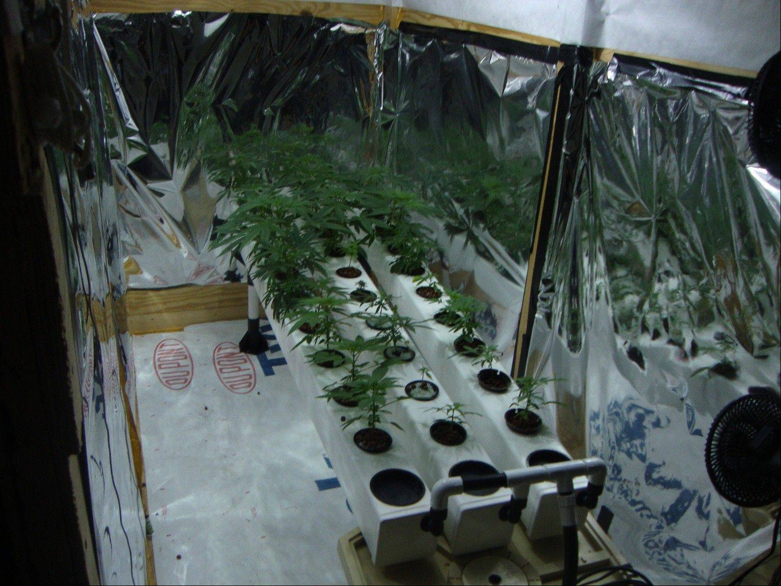 Marijuana was being grown inside this home in Glenview, Cook County sheriff's police said.