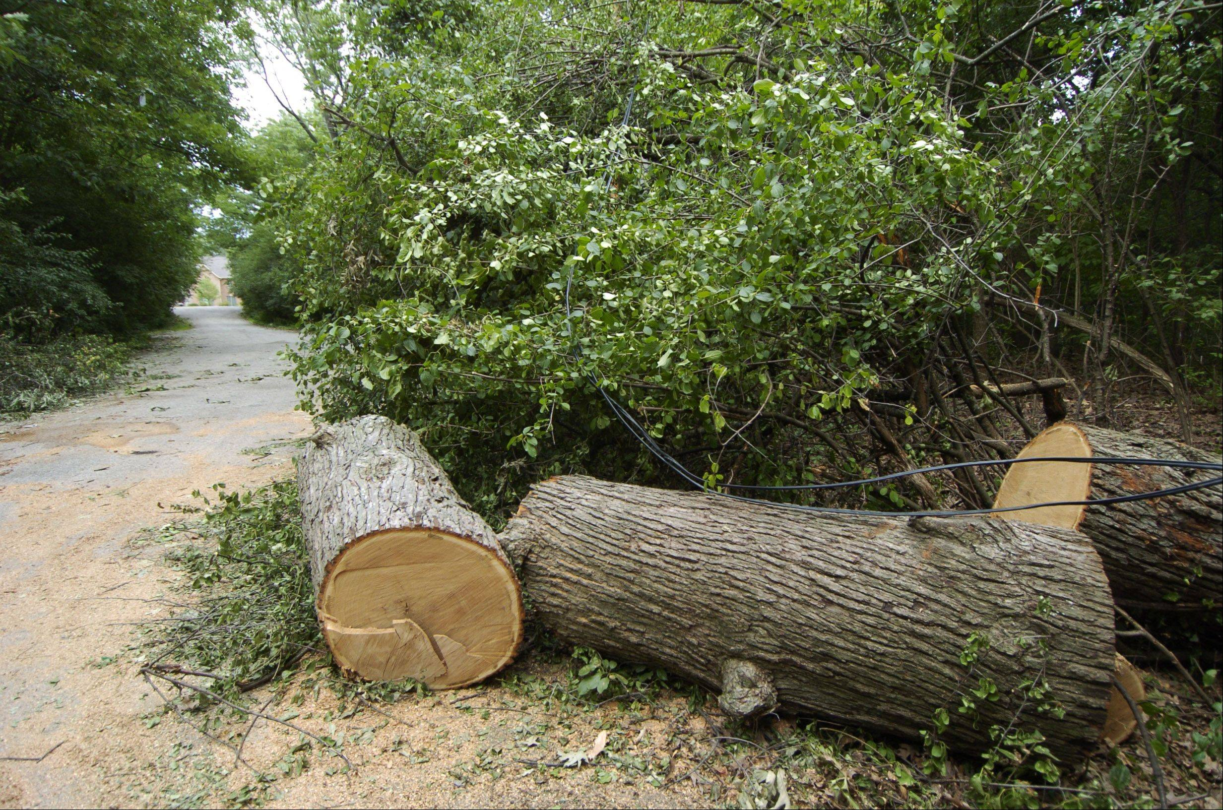 The remains of a tree that blocked Timberlake Parkway in Barrington signaled the return of electrical power Saturday to a neighborhood that had been without electricity since Monday.