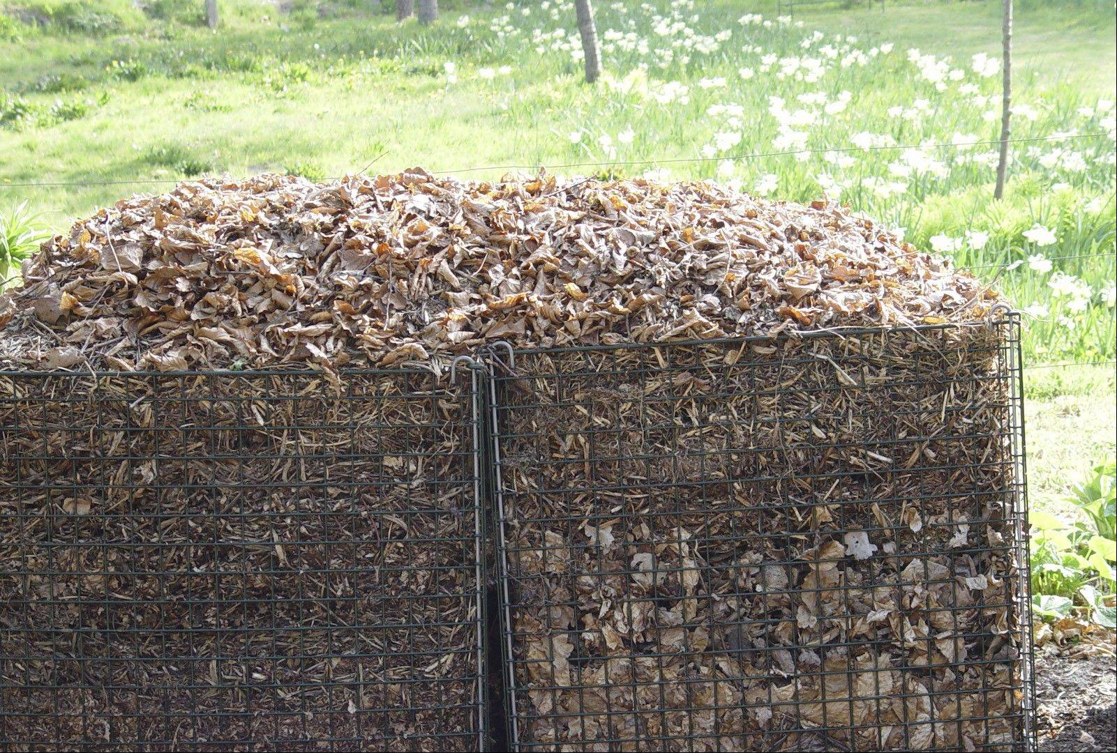 Mulch, including recycled autumn leaves, suppresses weeds and helps soil retain moisture.