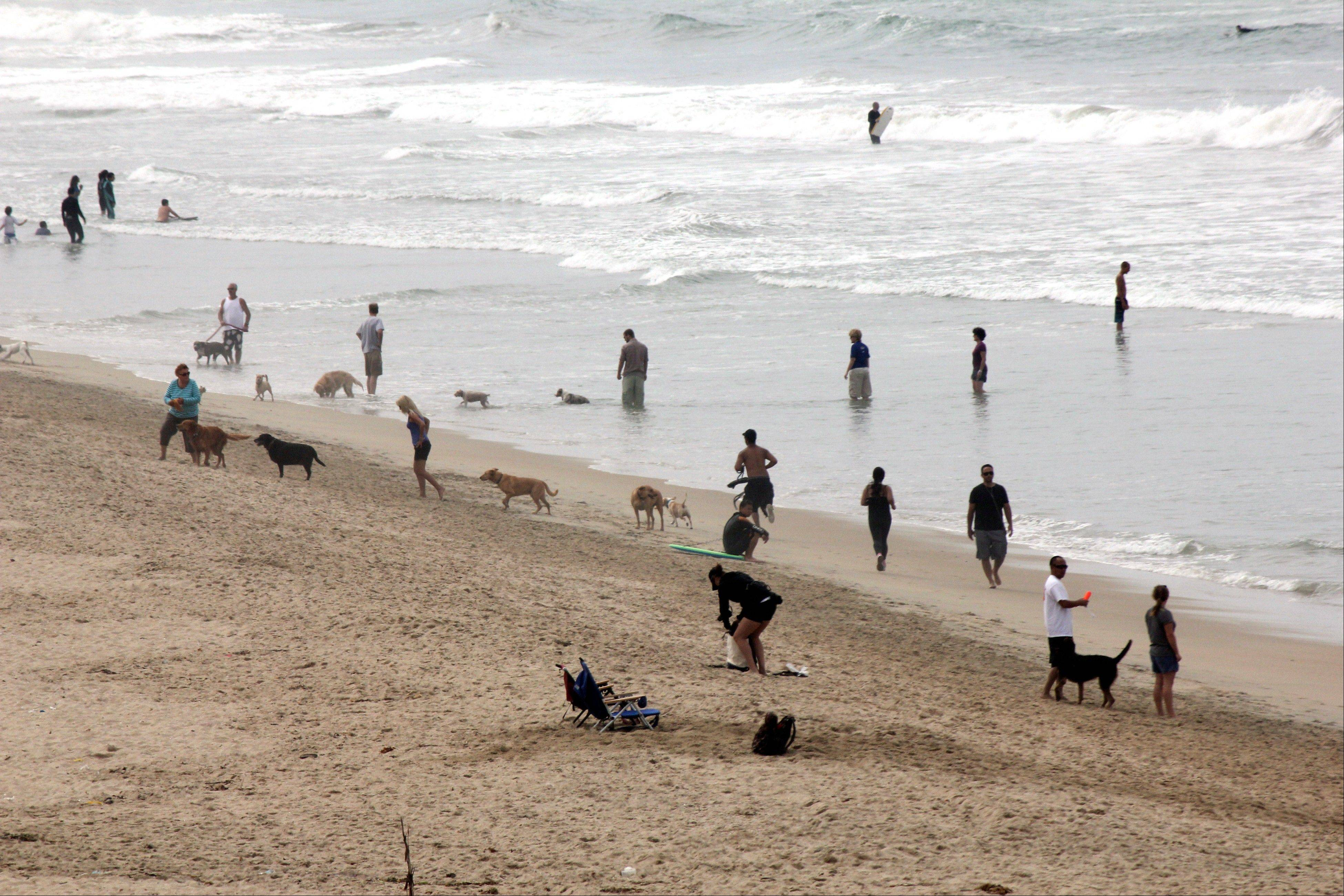 Dog friendly beaches and resorts that cater to canines have grown in popularity in the past few years and can be found around the country.