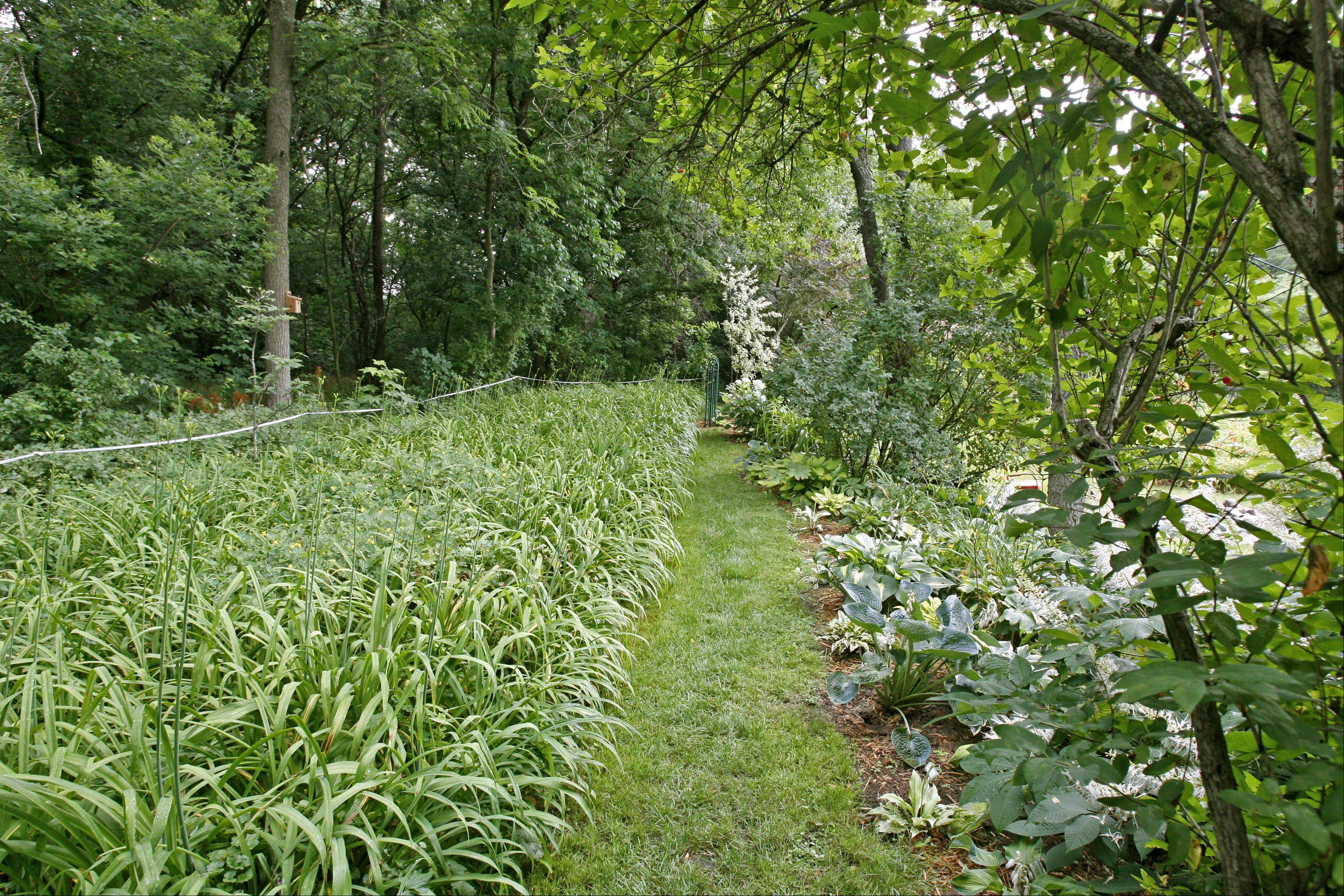 Hostas on the right are among Richter's treasures.