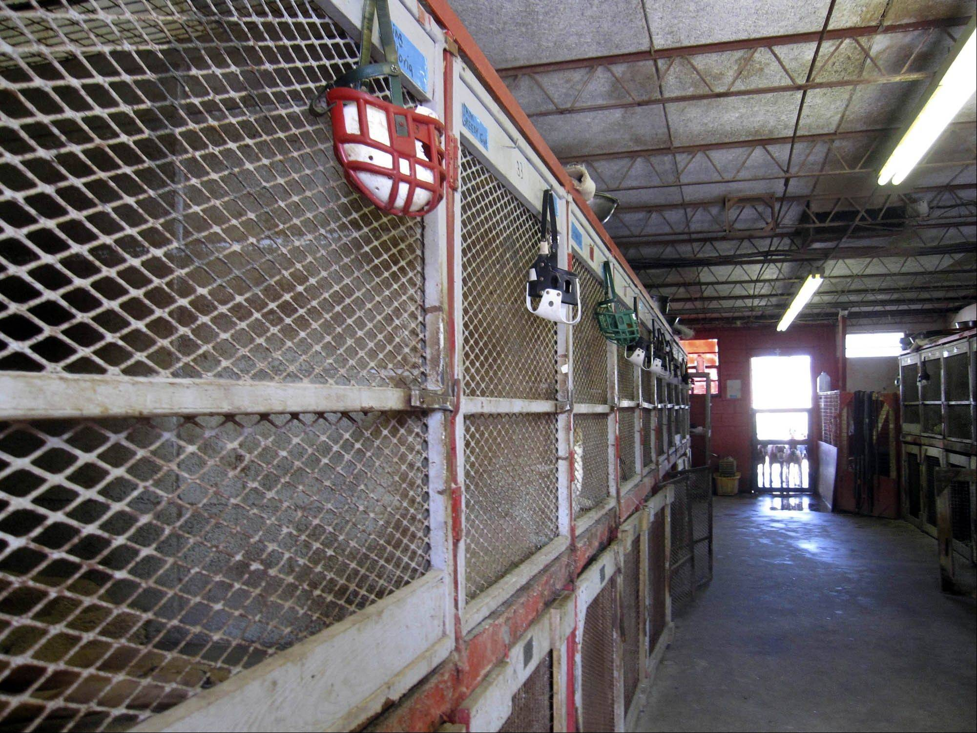 Stacked cages are shown at a racetrack kennel in Florida in April 2011. Florida currently has 13 racetracks in operation, the most in the U.S. by far.