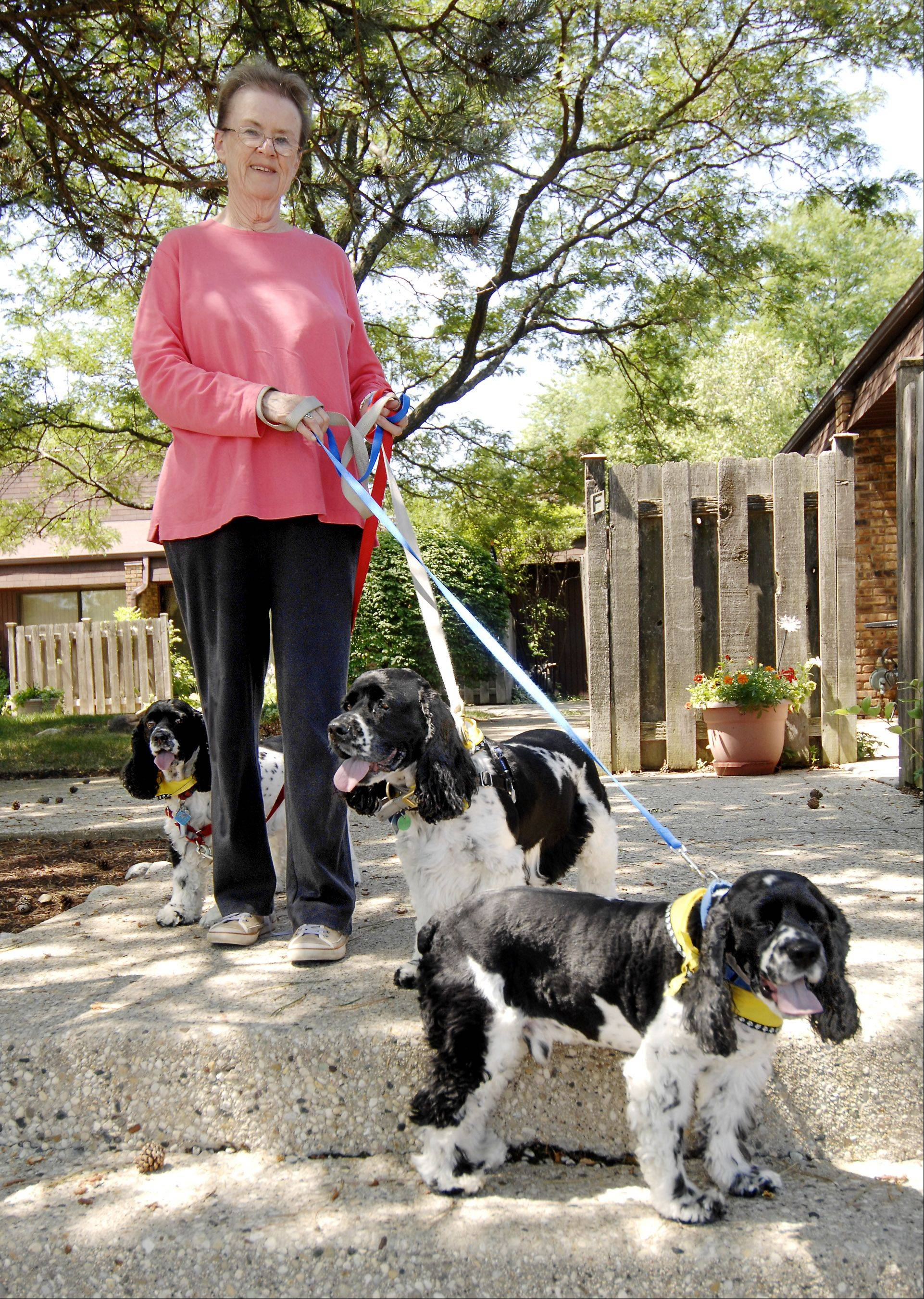 Karen Schlabach is the owner of three black-and-white cocker spaniels, Romeo, Chipper and Cooper. Each dog has his own profile with hundreds of friends on the canine social network DoggySpace.