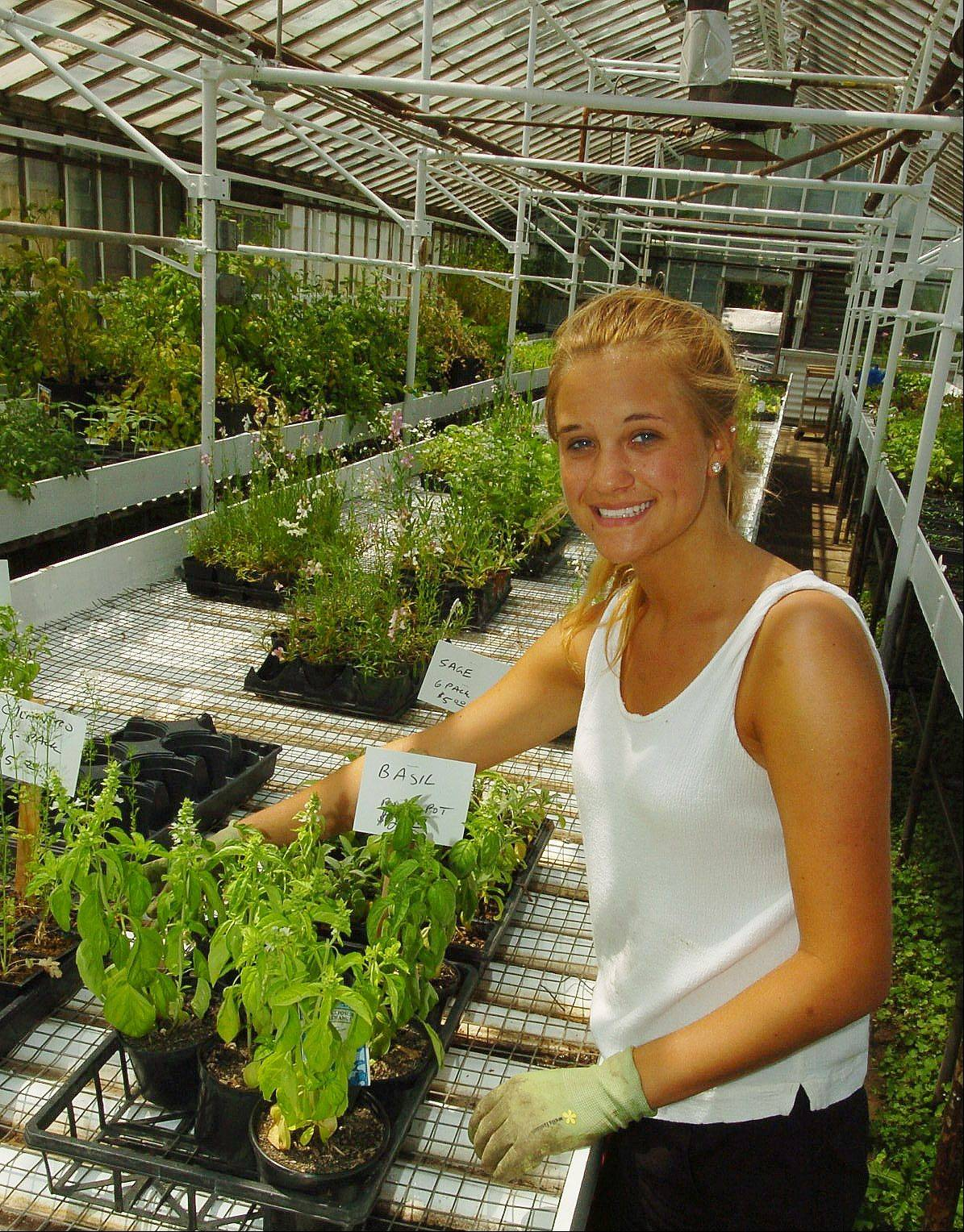 Kirsten Halvorsen tending to basil in the greenhouse at Natural Environments nursery in Hawthorn Woods.