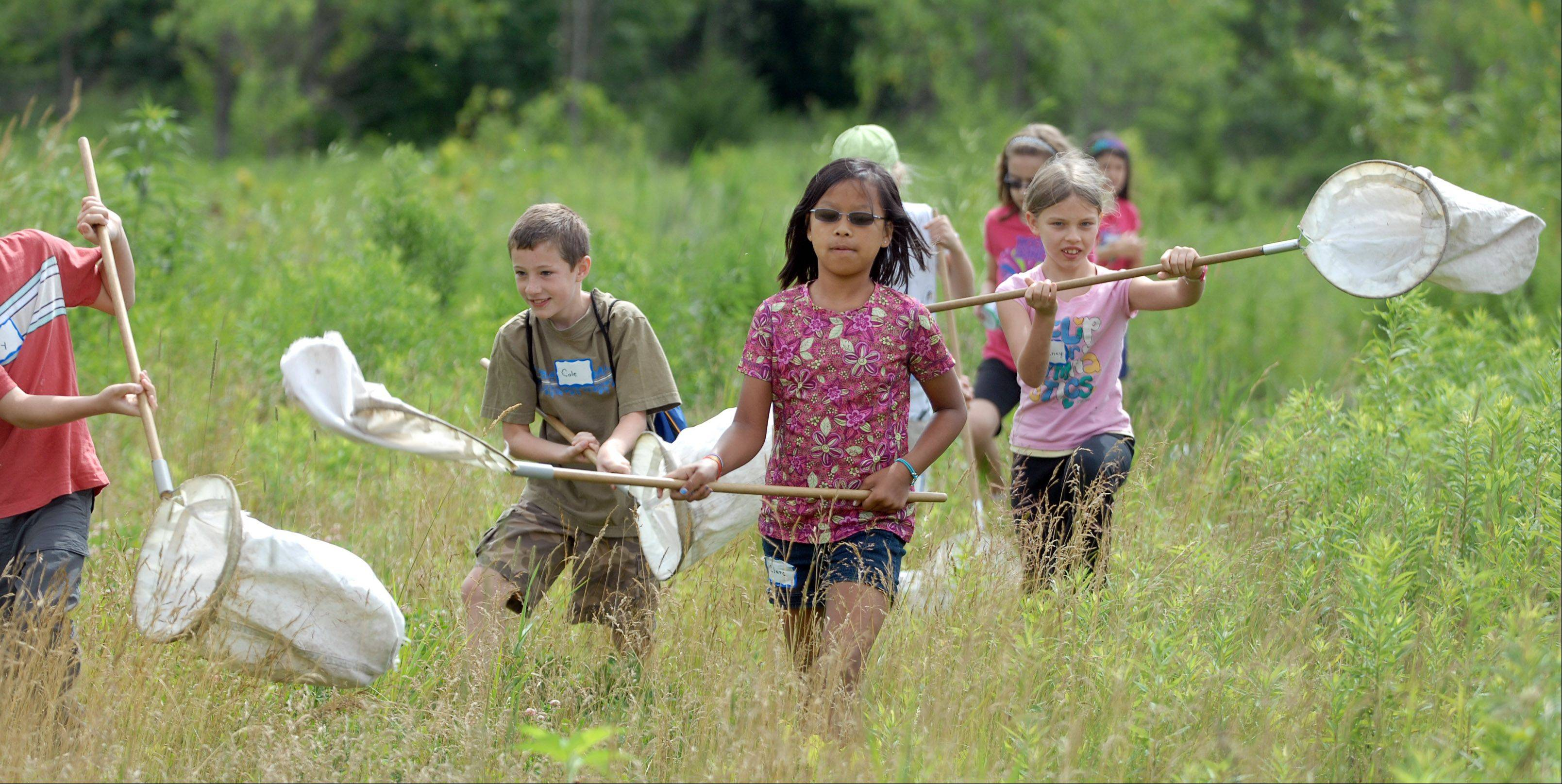 Children in third and fourth grades are participating in the Lake County Forest Preserve's Eco Adventurers Camp at Heron Creek Forest Preserve near Long Grove this week. Wednesday, the kids swept a field with nets trying to catch spiders to study.