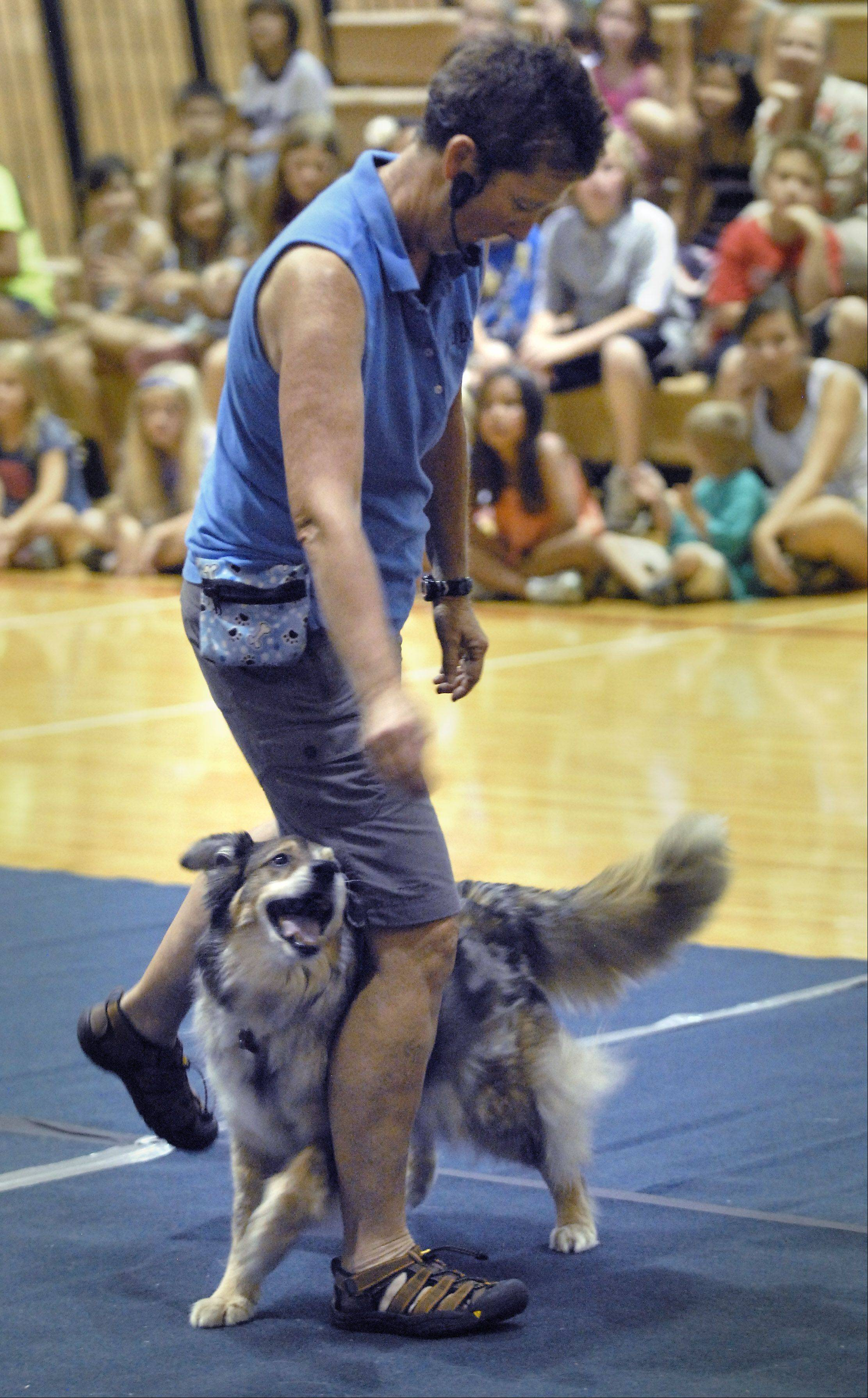 Carson dances with trainer Mare Potts during a performance by the Aurora-based FlyDogs on Wednesday at the Palatine Park District's Community Center Gym.