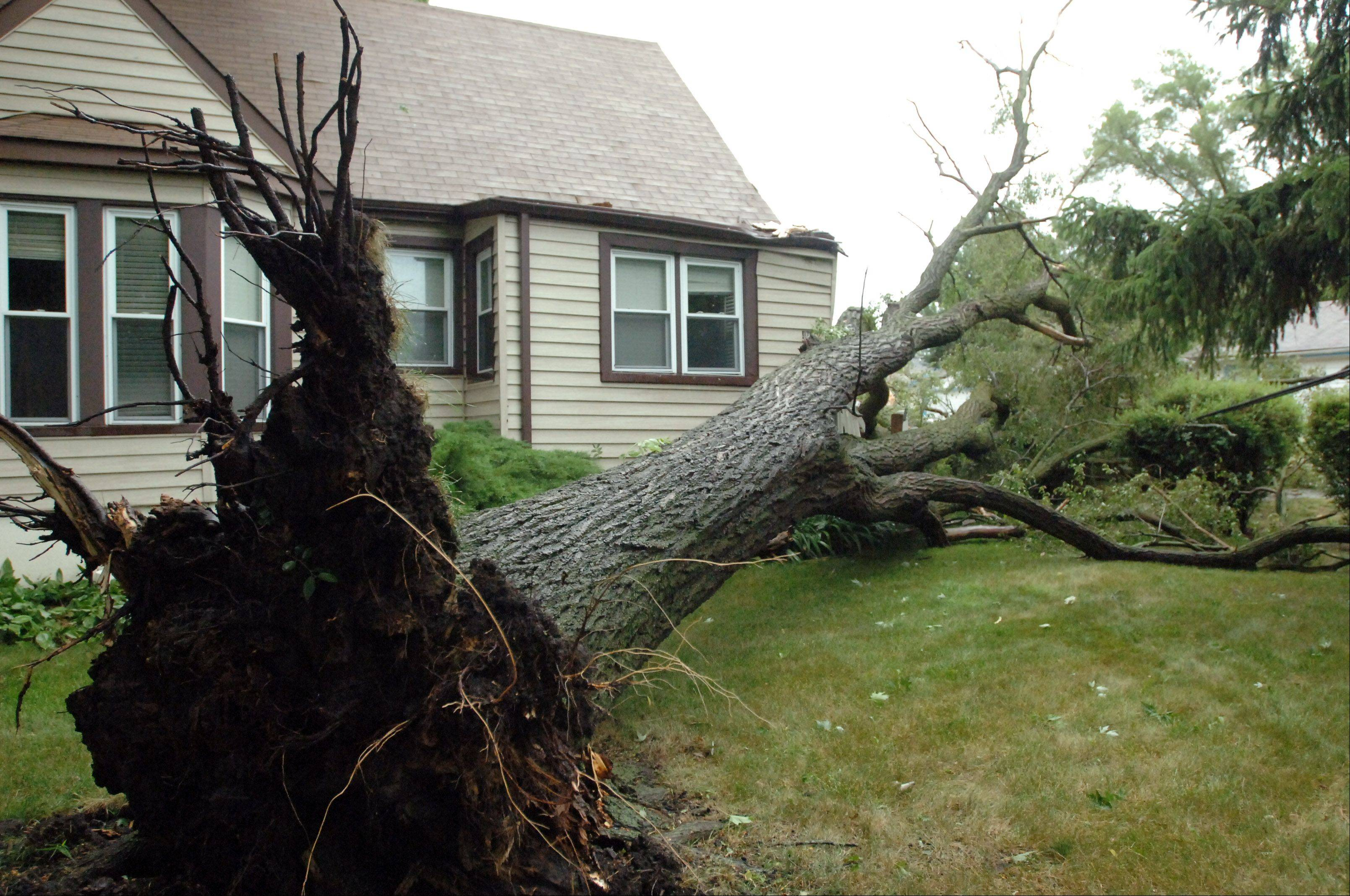 An uprooted tree hit the corner of Richard and Linda Whitmore's home on Clifton Road in Round Lake Park following the July 11 storm.