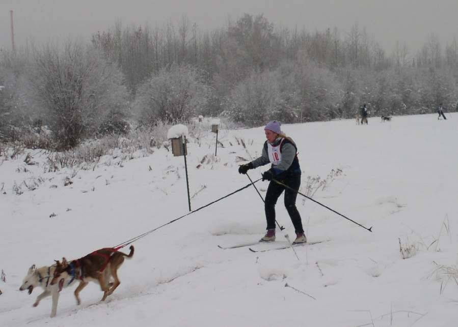 For recreation, Kimberlee Beckmen skijors, pulled on cross-country skis by her two Alaskan huskies.