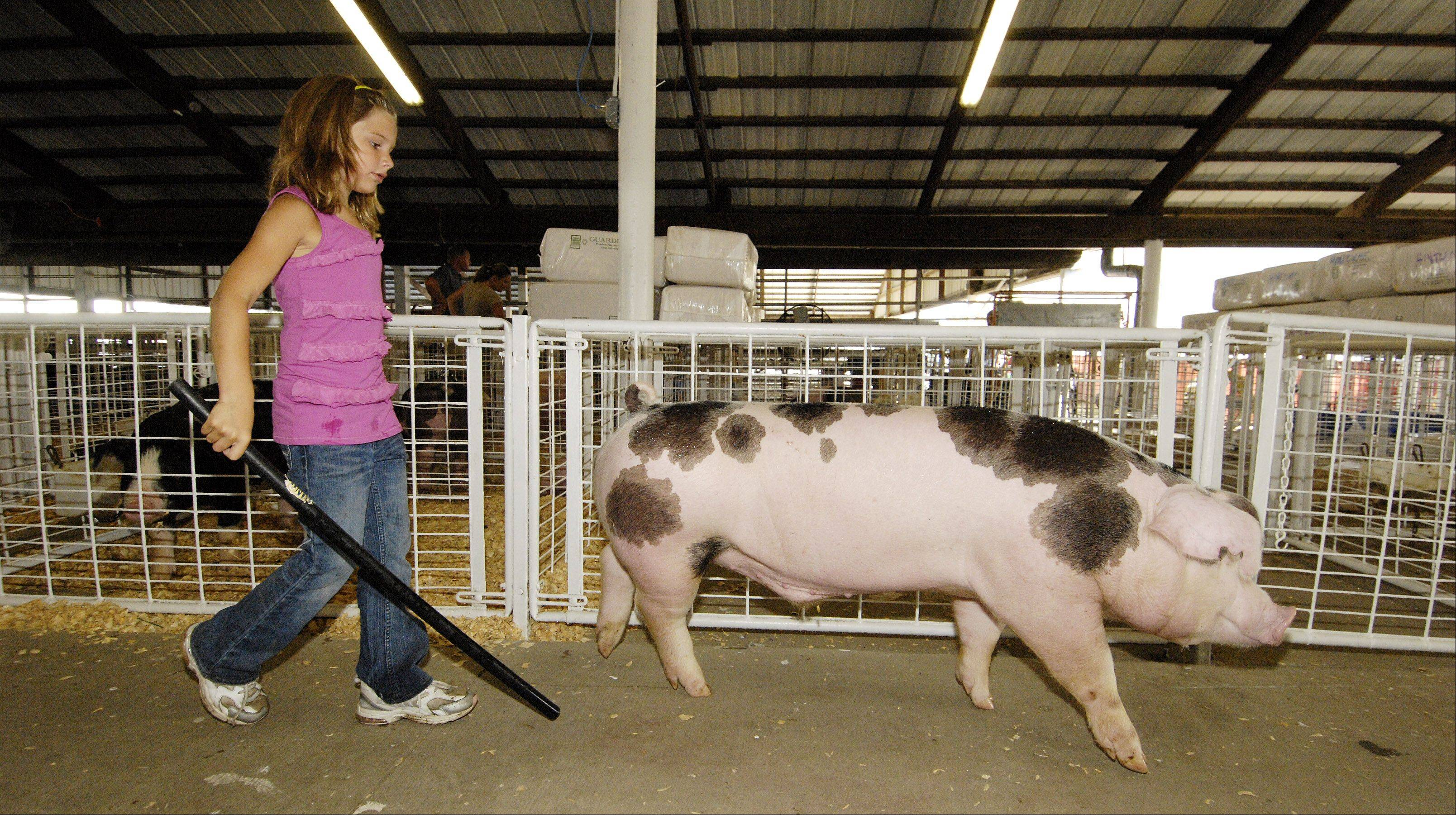 Ashleigh Wackerlin, 7 of Hinckley moves one of her spotted pigs into its pen on Tuesday before the start of the DuPage County Fair in Wheaton.
