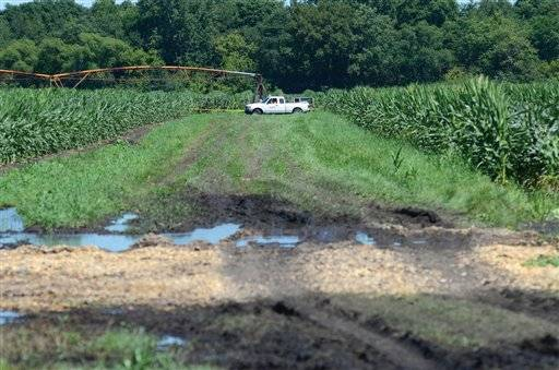 A ComEd truck in a cornfield outside Tampico, near the the scene where two farm workers were killed in an electrocution accident while they were removing tassels from corn .