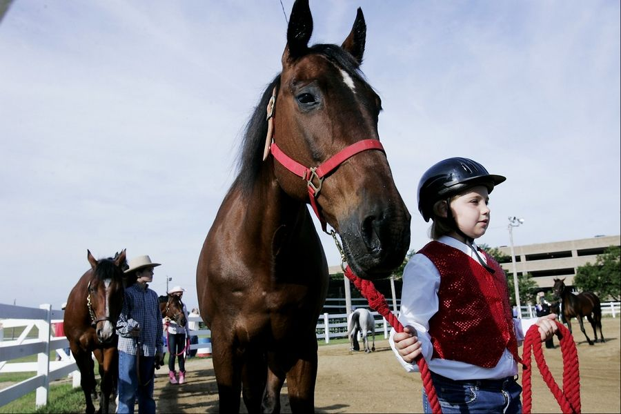 "Participants for the DuPage County Fair's 4-H Horse and Pony Show may take part in a variety of different classes, from dressing to beginner's riding to the ""Handsome Too"" Challenge."