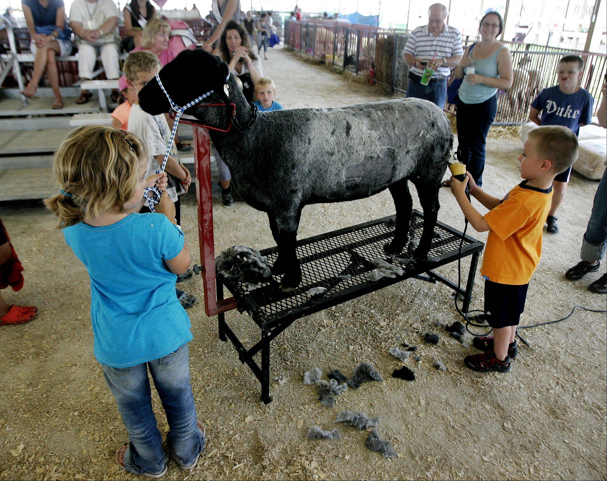 Sarah Fisher, 8, of Zion holds her sheep, Diva, as Ryan Harris, 5, of Gurnee shears it during a demonstration Thursday at the 83rd annual Lake County Fair at the fairgrounds in Grayslake.