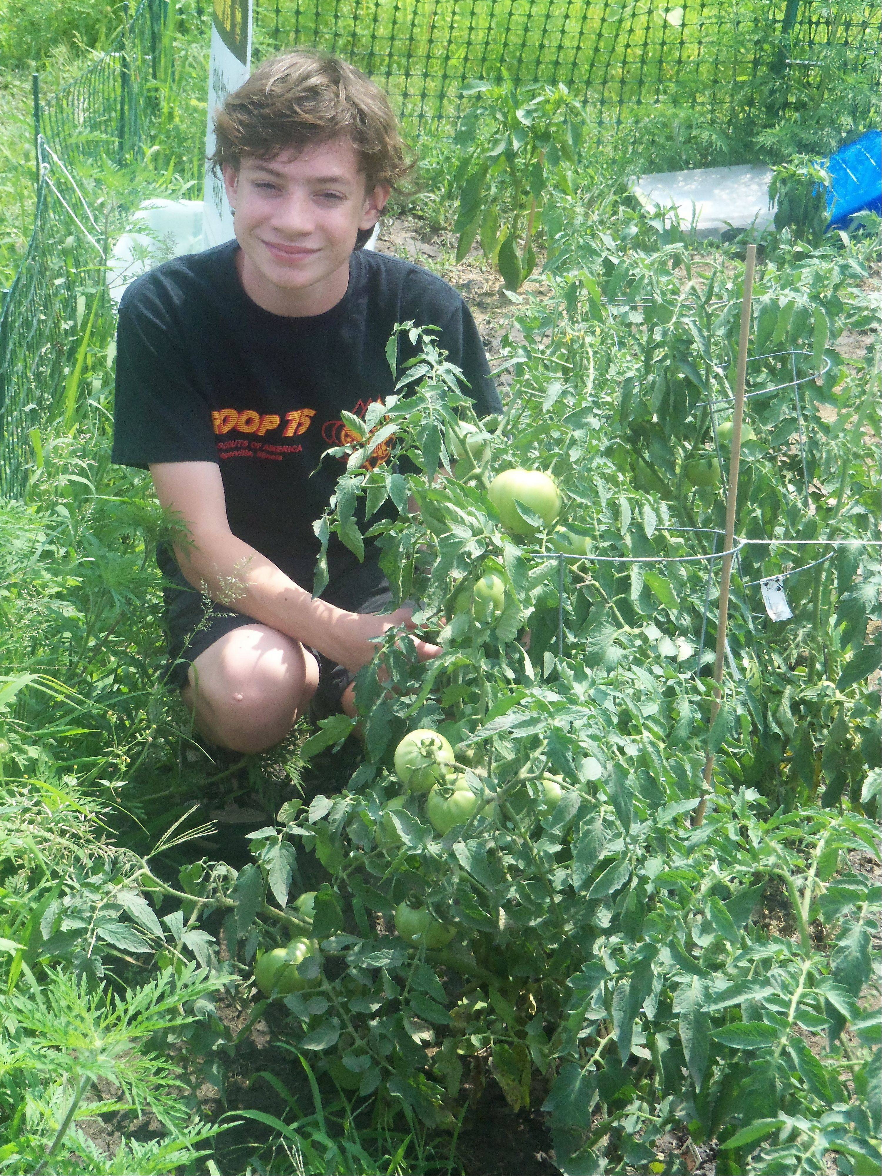 Boy Scout Alex Boyle of Naperville planted a garden to grow produce for the Loaves & Fishes Food Pantry in Naperville for his Eagle Scout project.