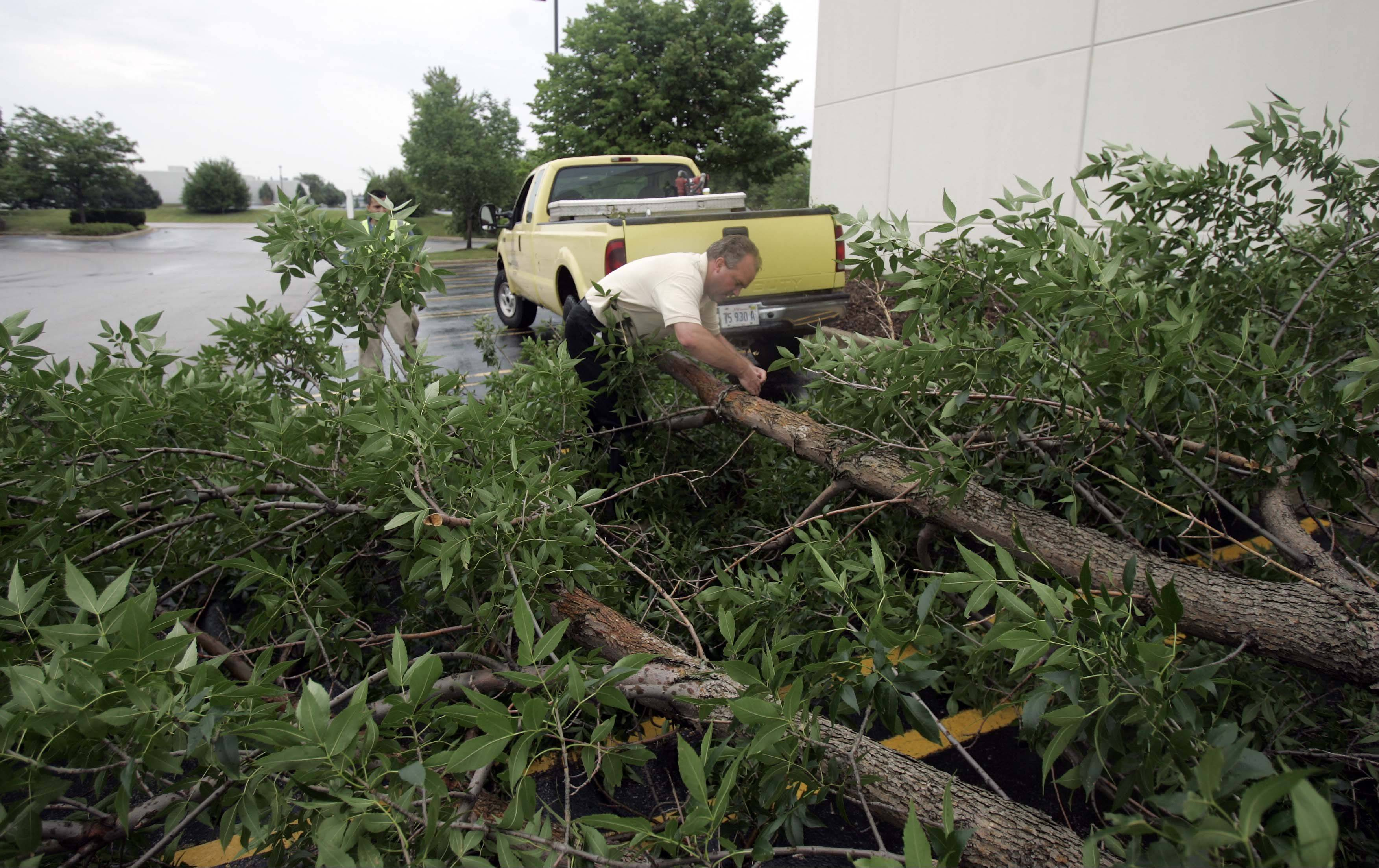 Bob Nelson of Sebert Landscaping Co. unhooks a chain from one of the many downed trees at an industrial park in Carol Stream. The crew was working fast to clear the streets and parking lots of the complex.