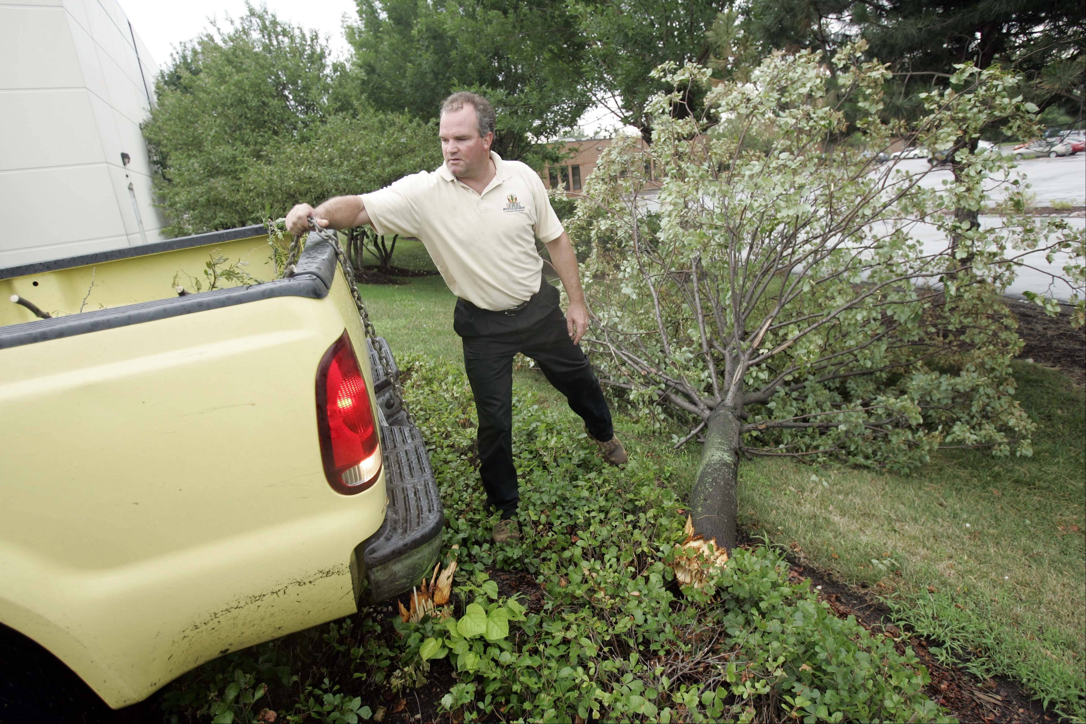 Bob Nelson of Sebert Landscaping Co. prepares to hook up a chain to remove one of the downed trees at an industrial park in Carol Stream Thursday.