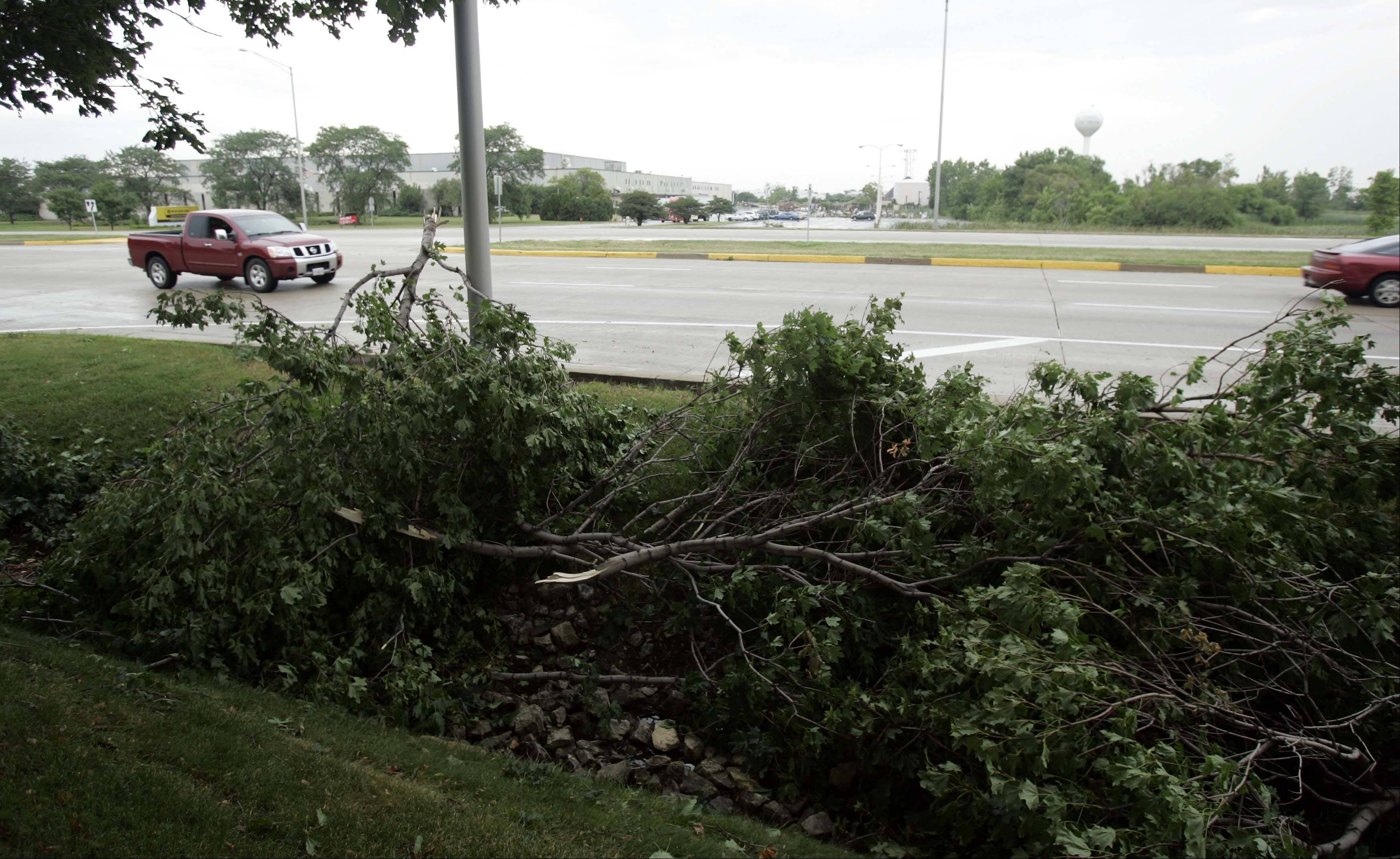 North Avenue east of Gary Avenue was dotted with downed trees Thursday following storms that passed through the area overnight.