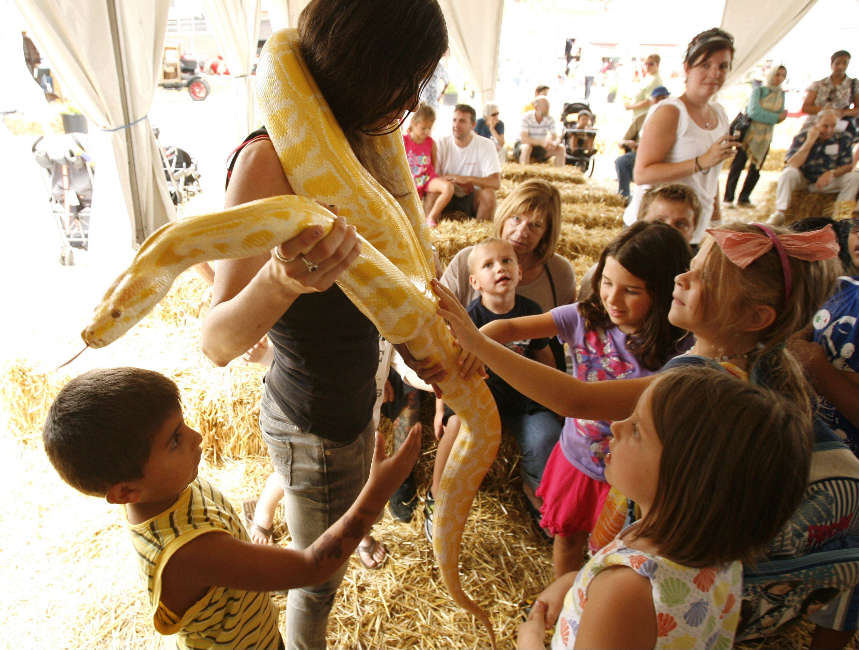 Curious onlookers get a closer look at the 3-year-old Albino Burmese Python snake held by Rachel Fessler, a handler for the exotic animal show at the DuPage County Fair.