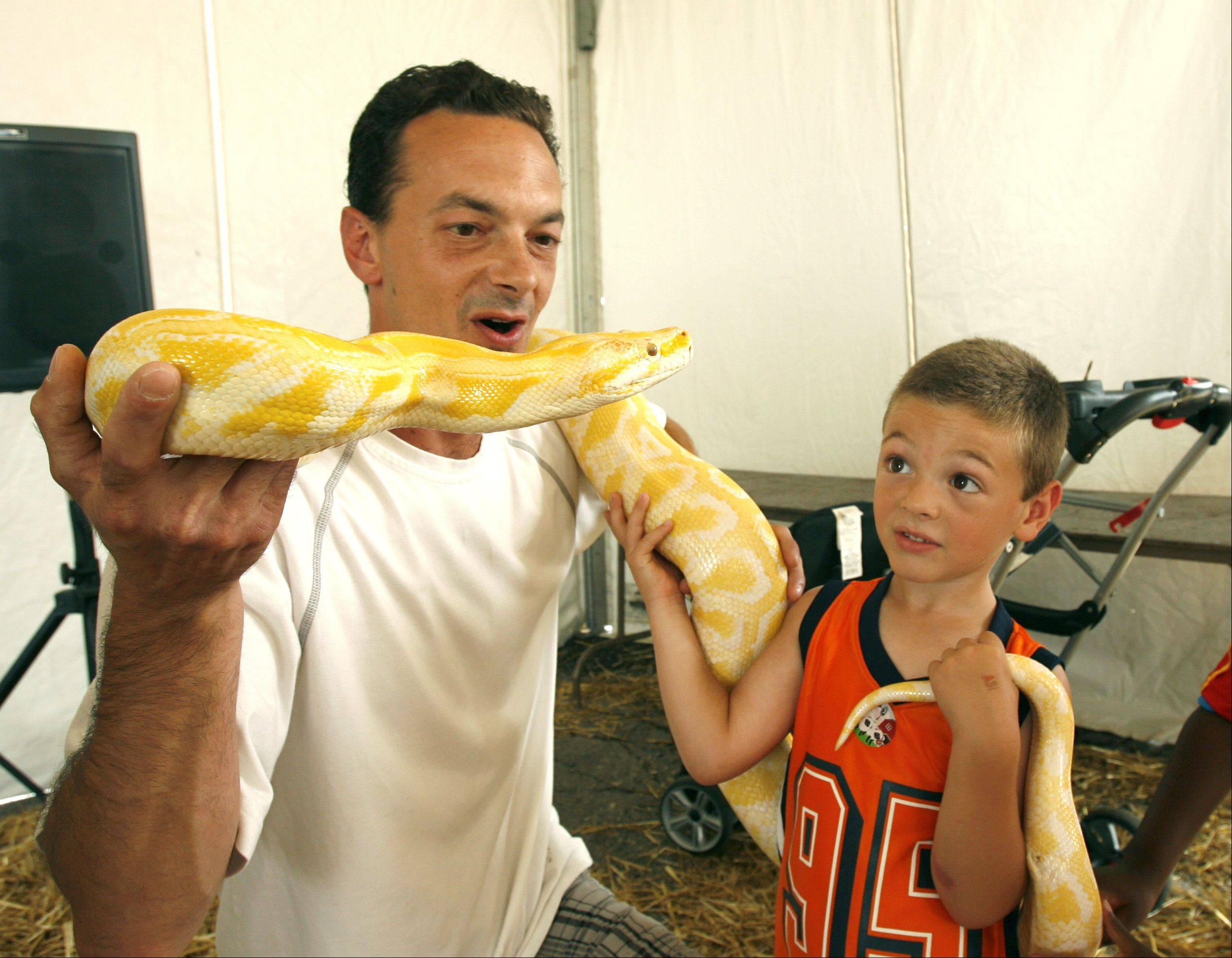 Tom Cecchin and his son Joey, 4, of Des Plaines get up close with a 3-year-old Albino Burmese Python during the first day of the DuPage County Fair. The snake was part of an exotic animal show in the fair's AgVentureland area.