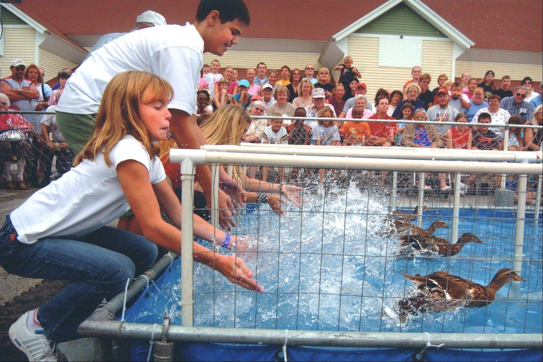 Crowd members at the DuPage County Fair get to release the ducks at the start of each race and the person with the winning duck gets a prize.