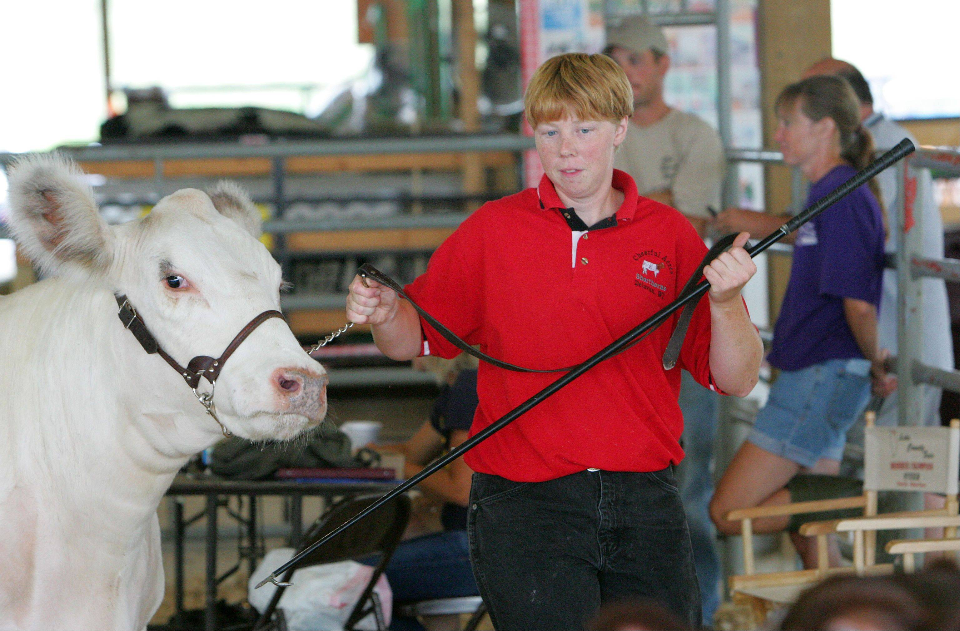Michelle Britzke of Delevan, Wi leads her open class grand champion shorthorn at the Lake County Fair in Grayslake Thursday.