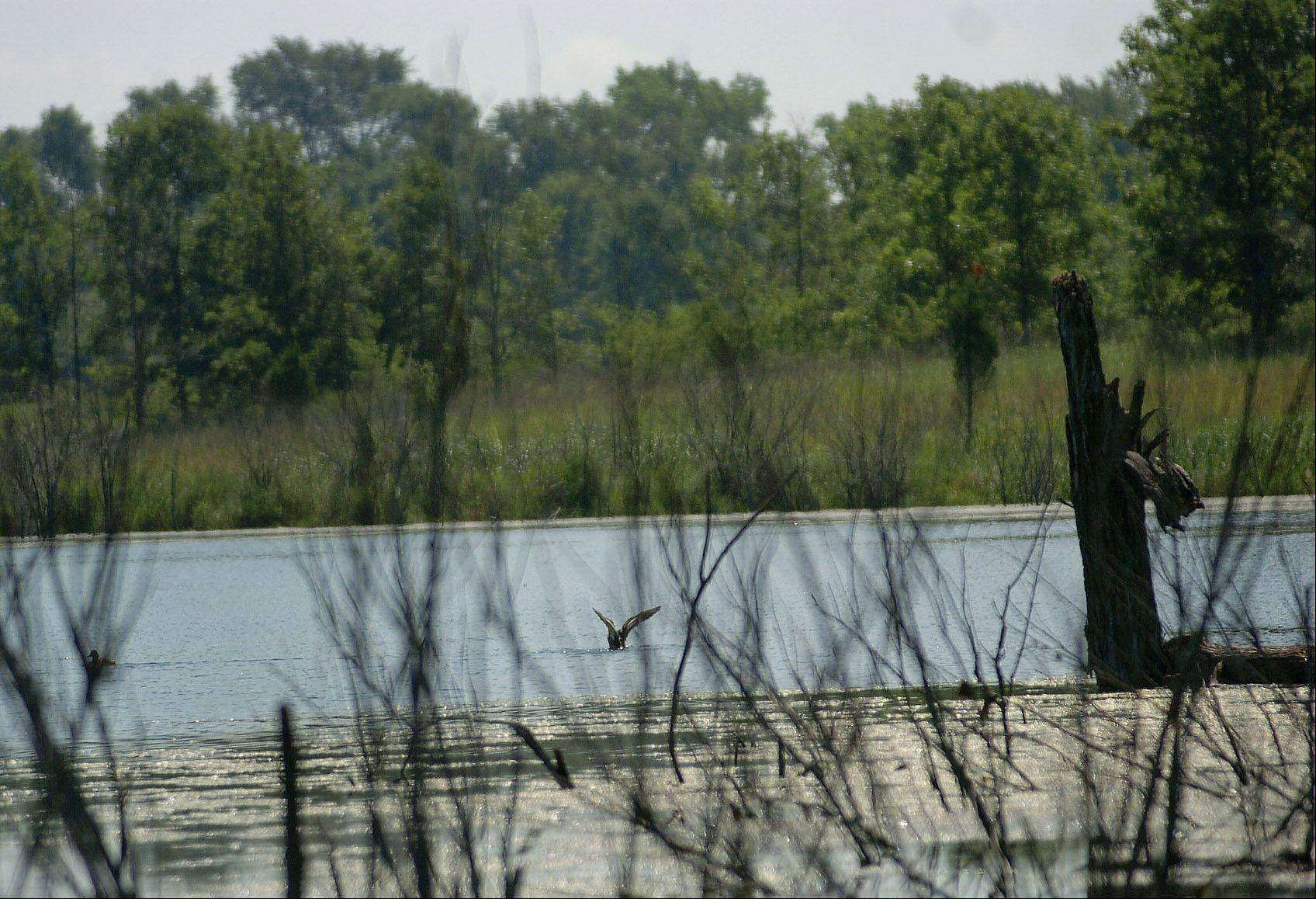 The Cuba Marsh Forest Preserve near Deer Park gives nature lovers an opportunity to enjoy the view.
